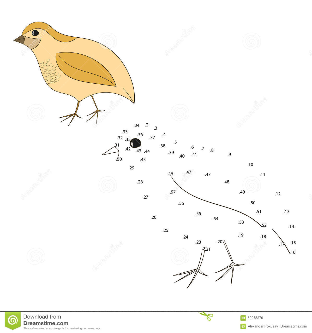 Connect The Dots Game Quail Vector Illustration