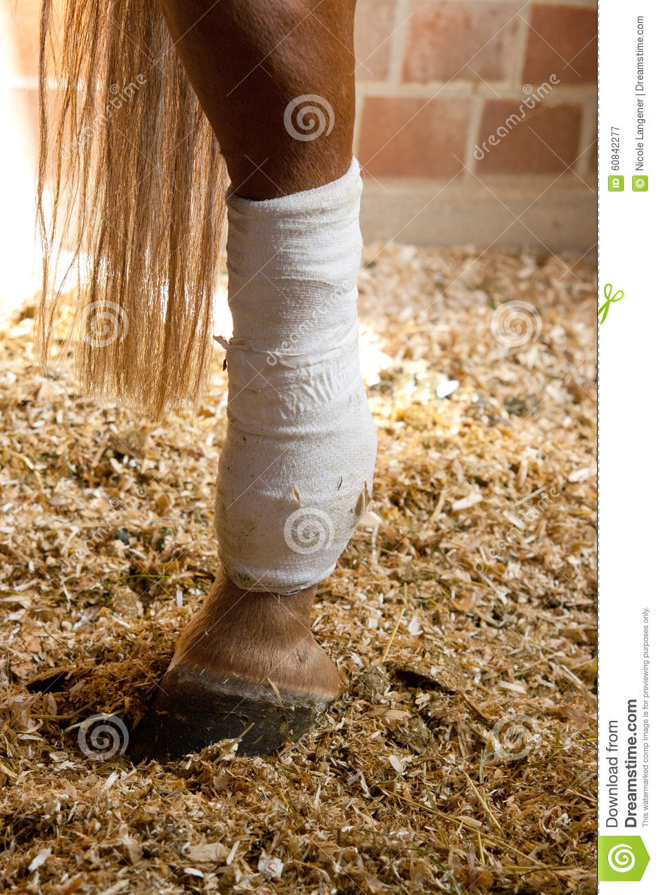 Connected horses leg