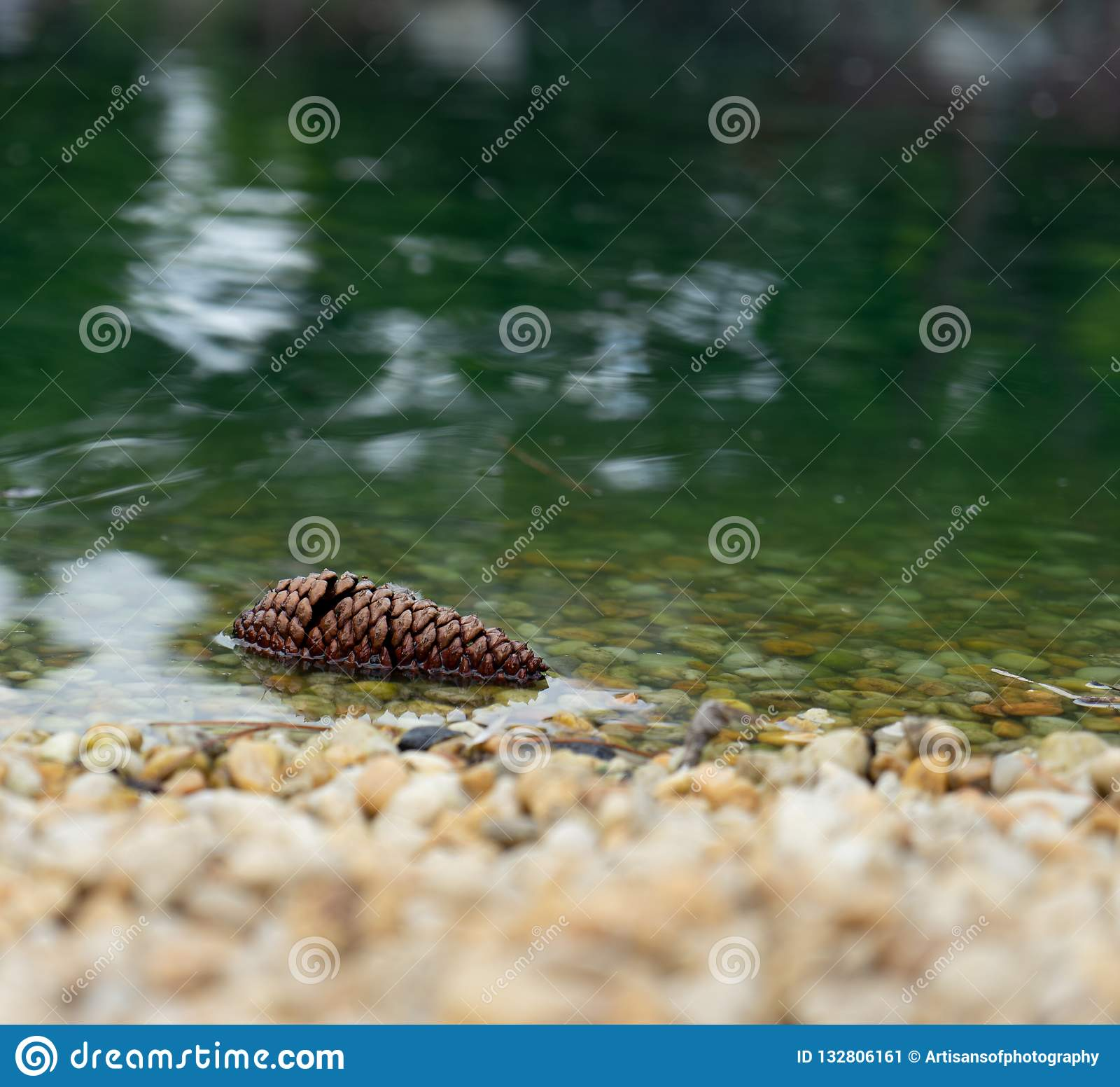 Cono del pino en agua
