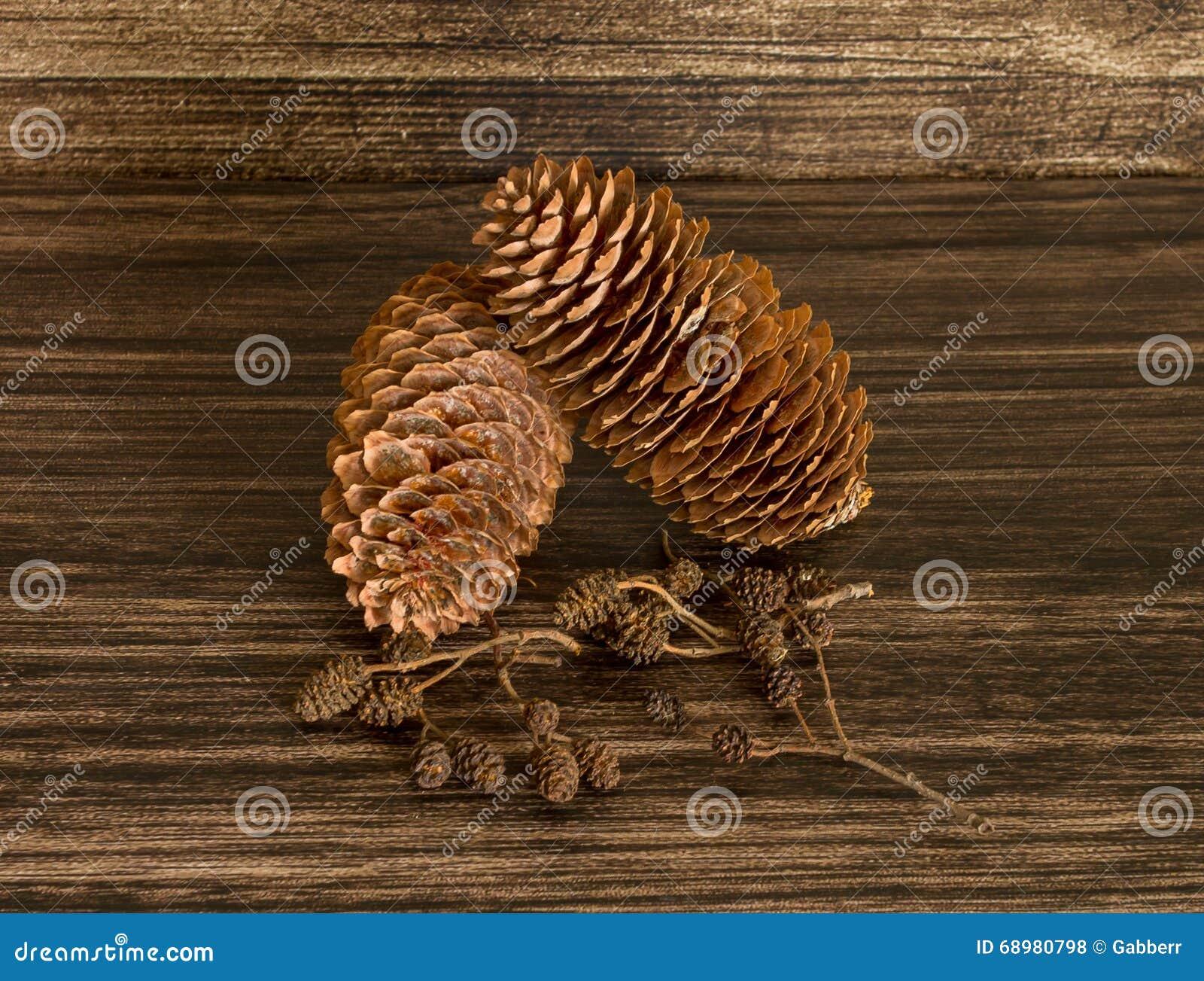 Conos secos del pino y conos del aliso