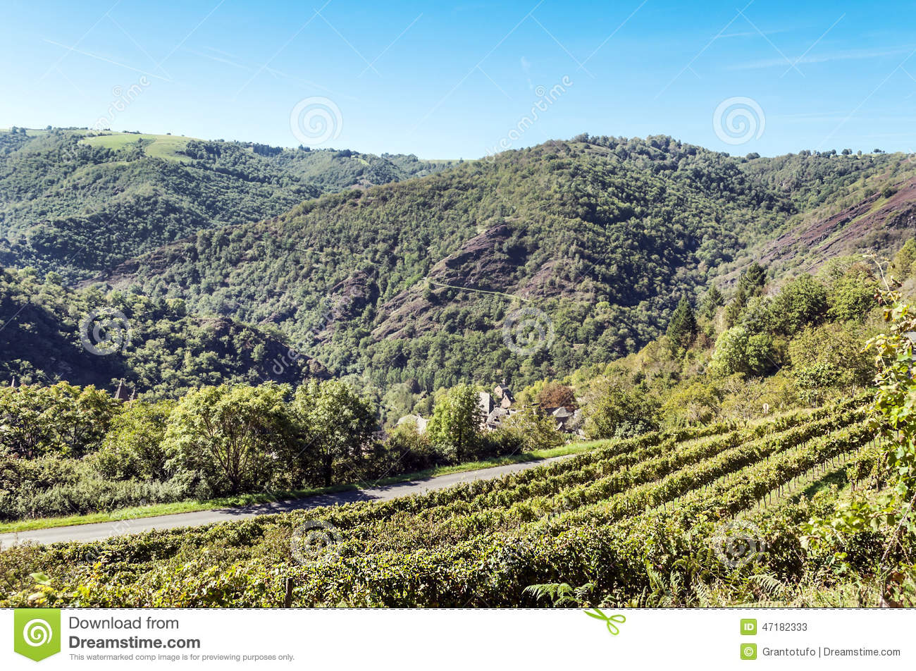 Conques vineyards