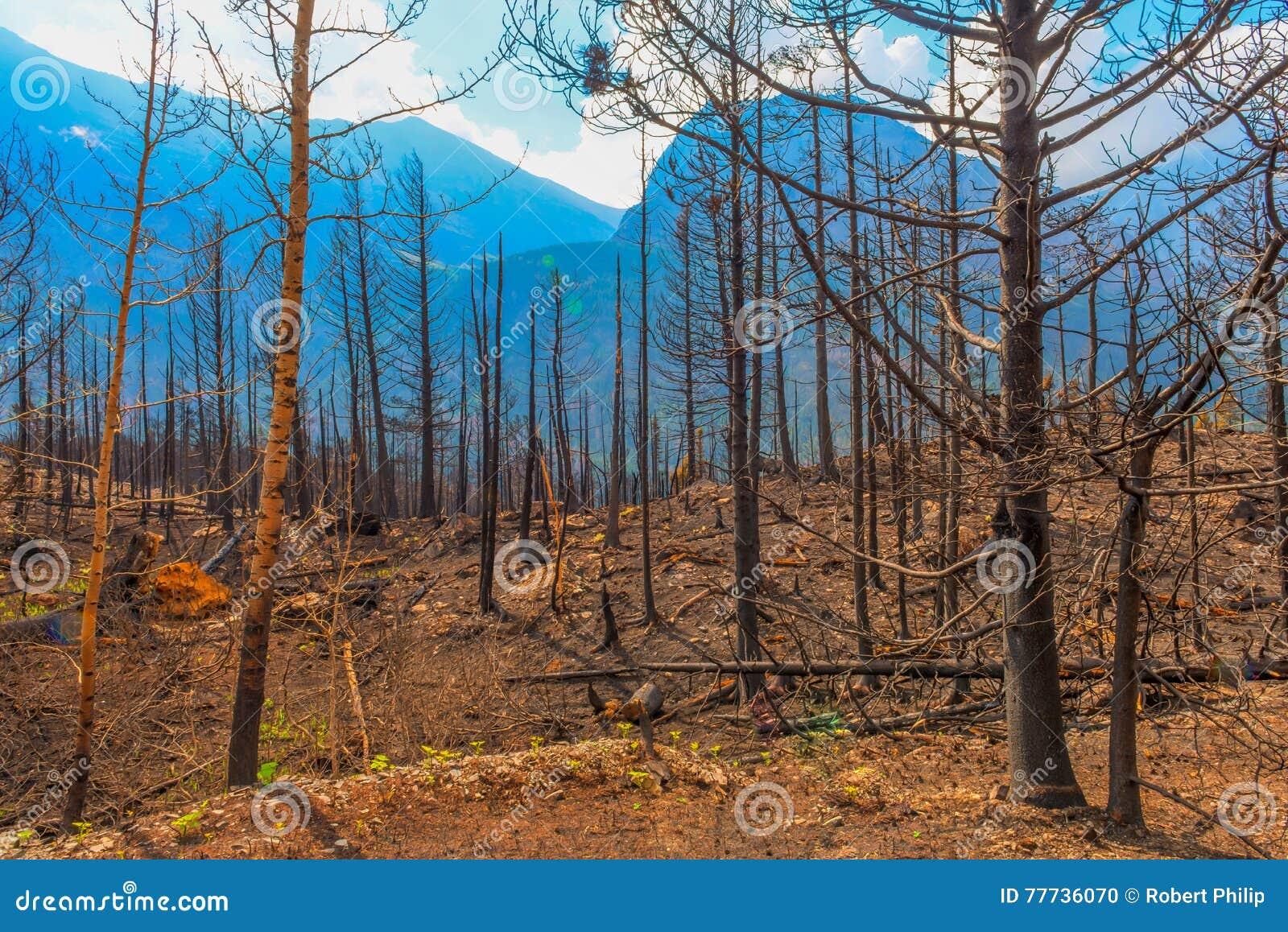 Consequências do parque 2015 nacional de geleira de Reynolds Creek Wildland Forest Fire
