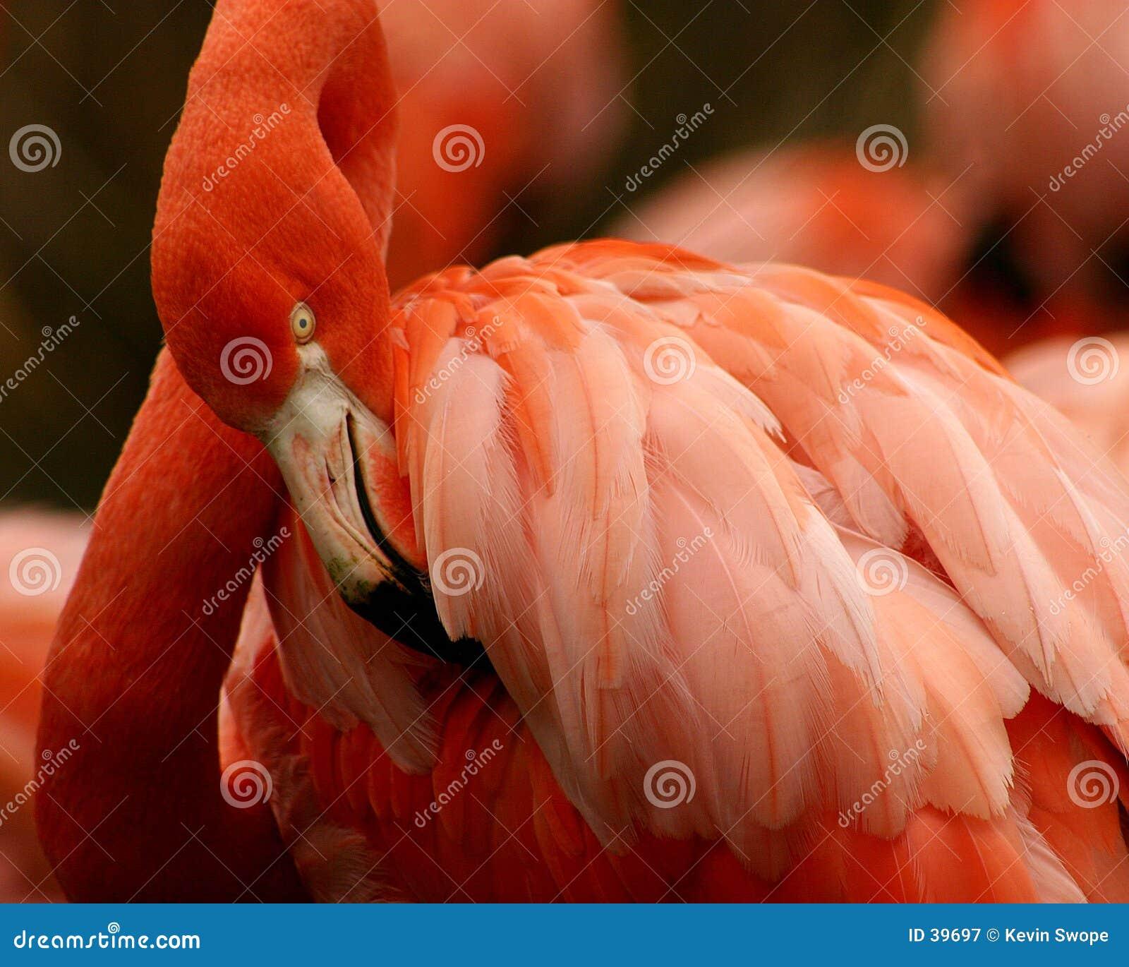Consideravelmente na cor-de-rosa