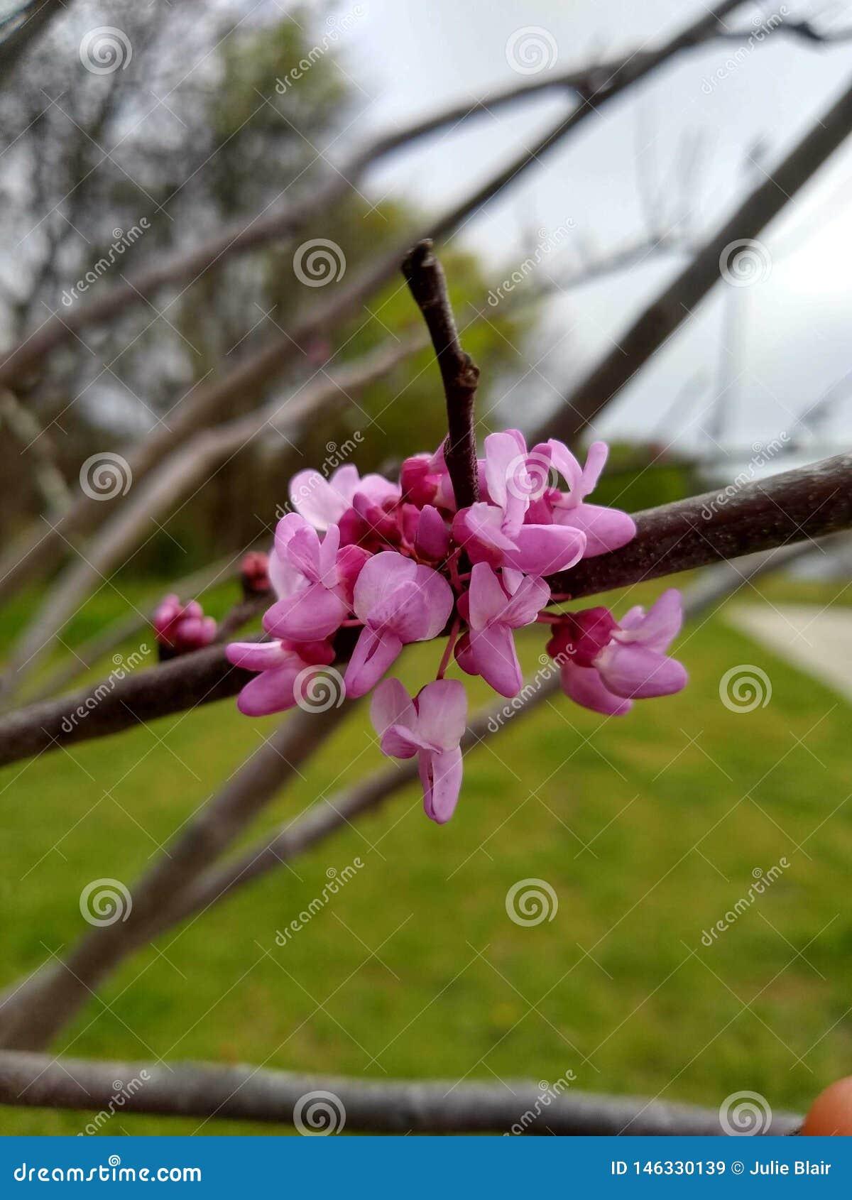 Consideravelmente nas flores cor-de-rosa
