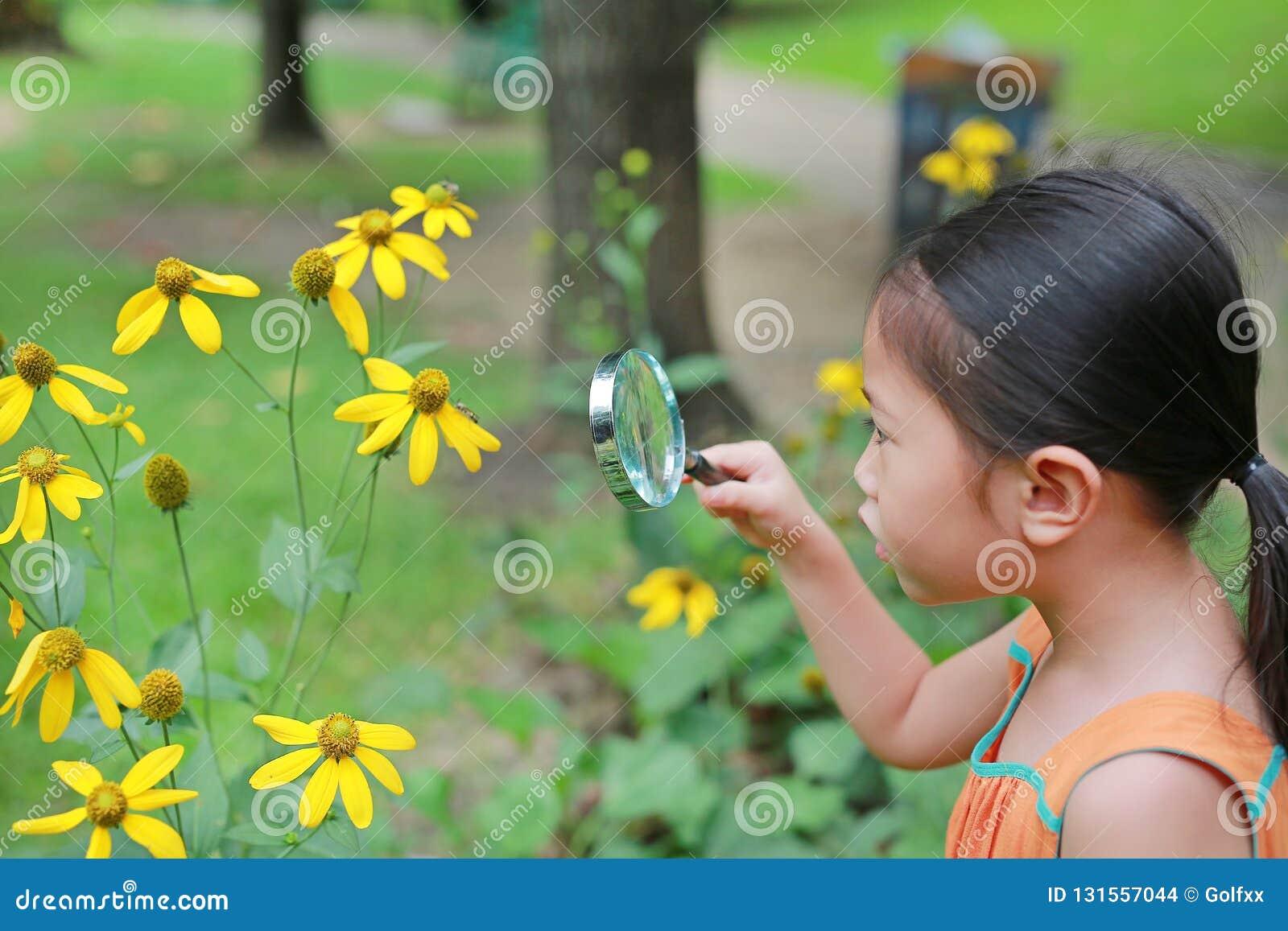 Consideravelmente pouca menina asiática da criança com olhares da lupa na flor no parque do verão