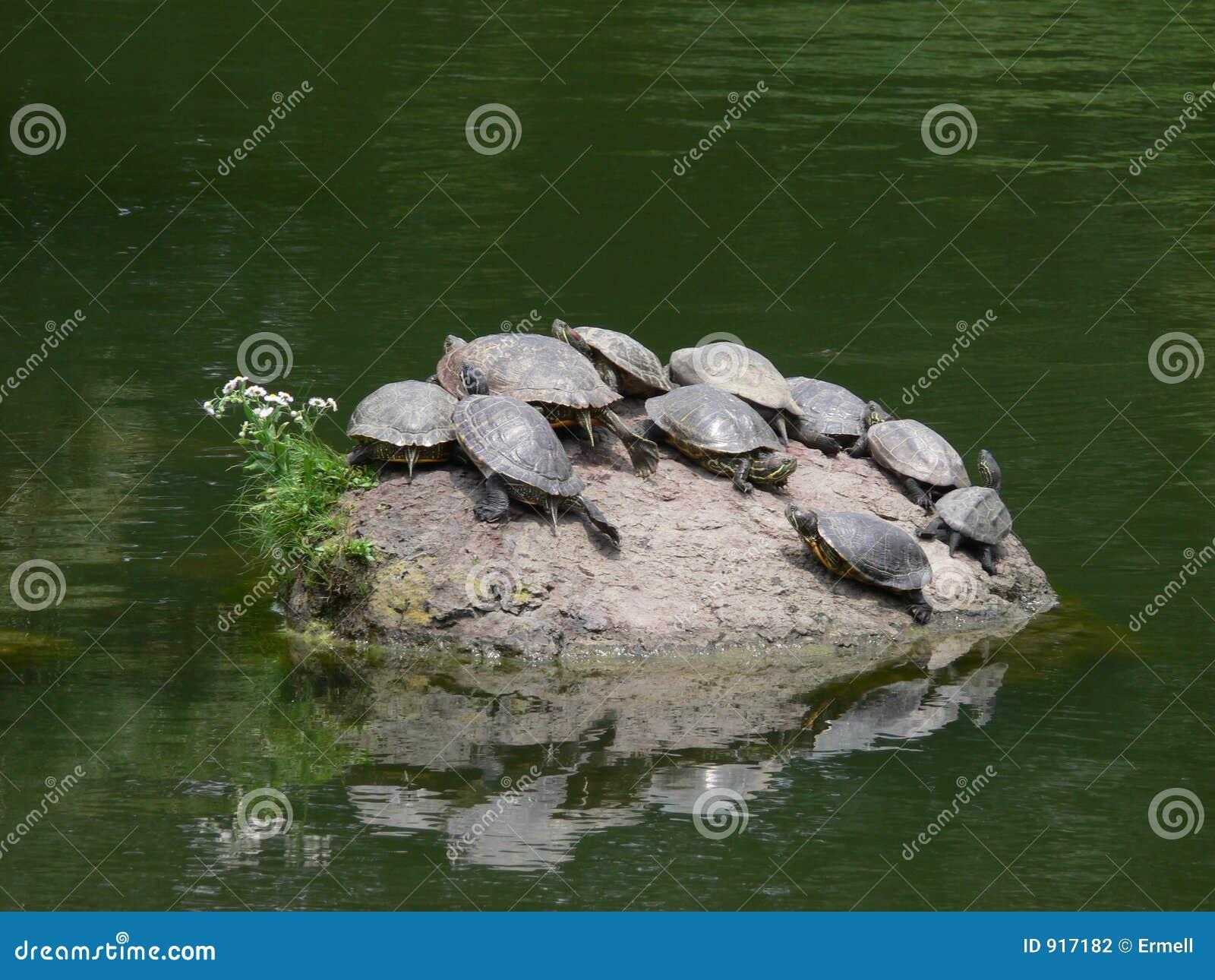 Console da tartaruga