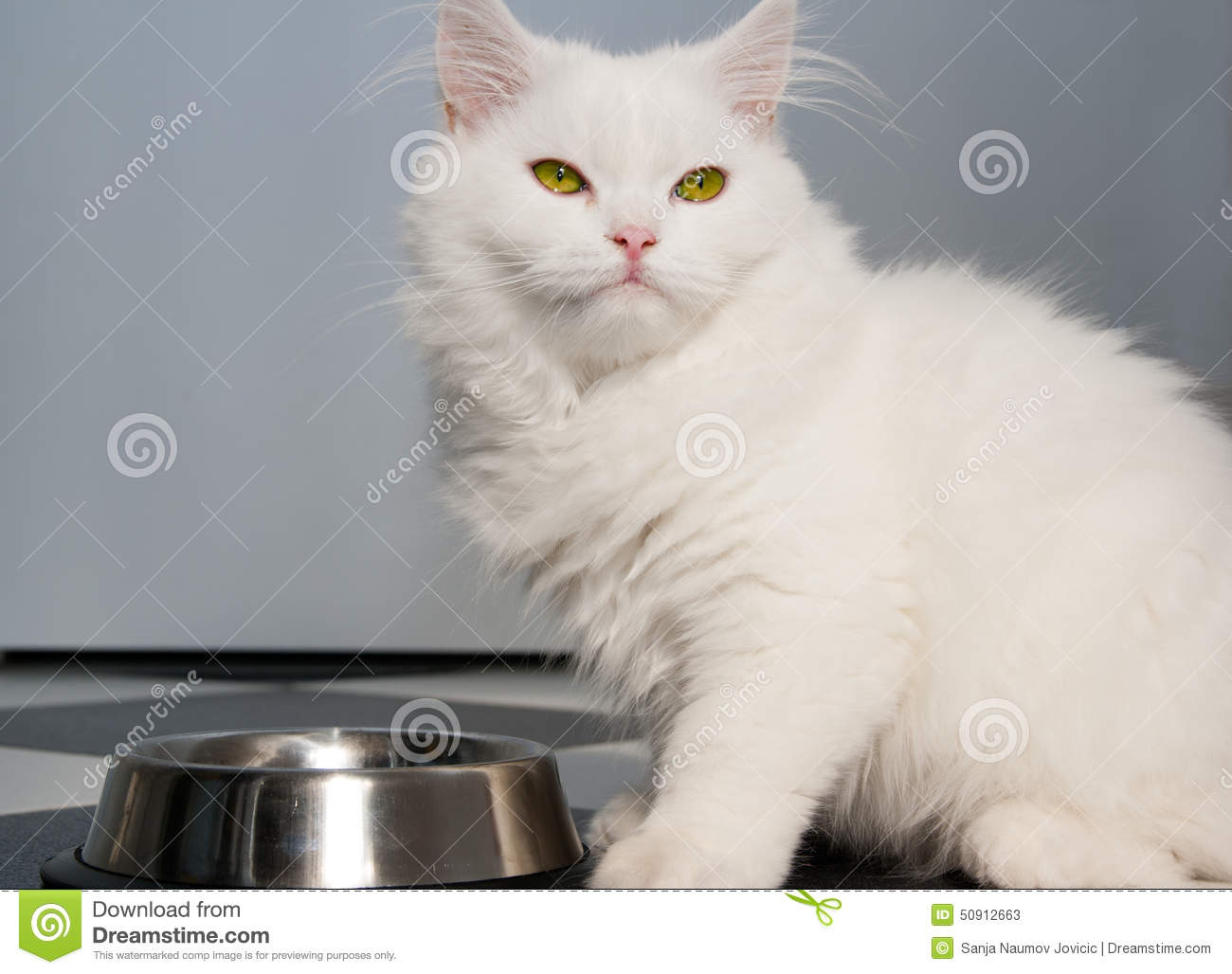 Consommation blanche de chat persan