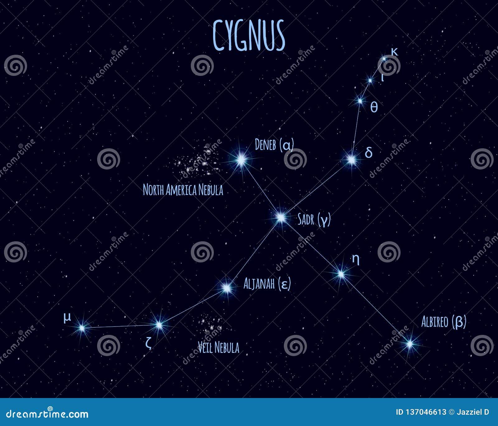 Constelação do Cygnus, ilustração do vetor com os nomes de estrelas básicas