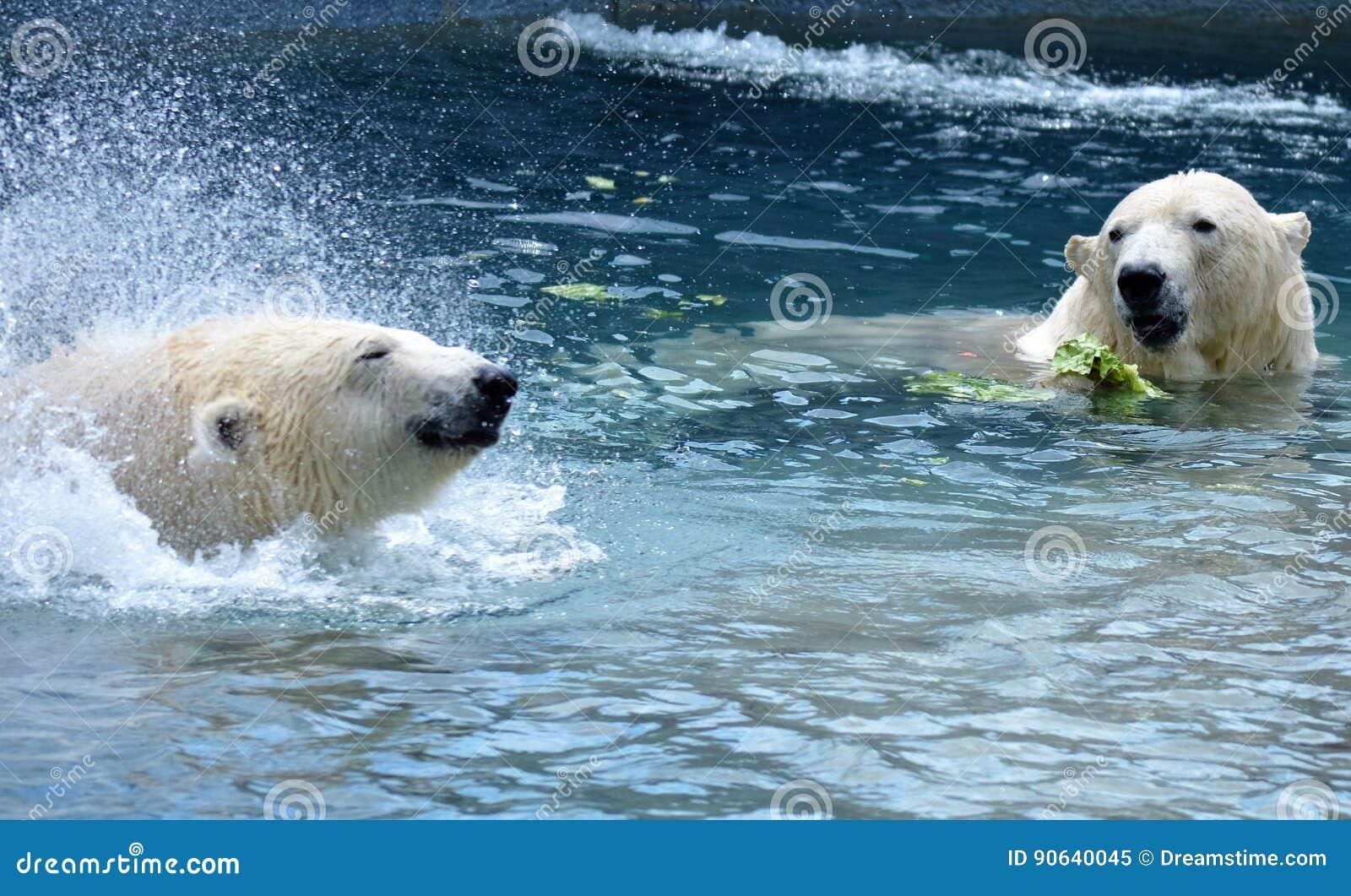 Consumición de los osos polares