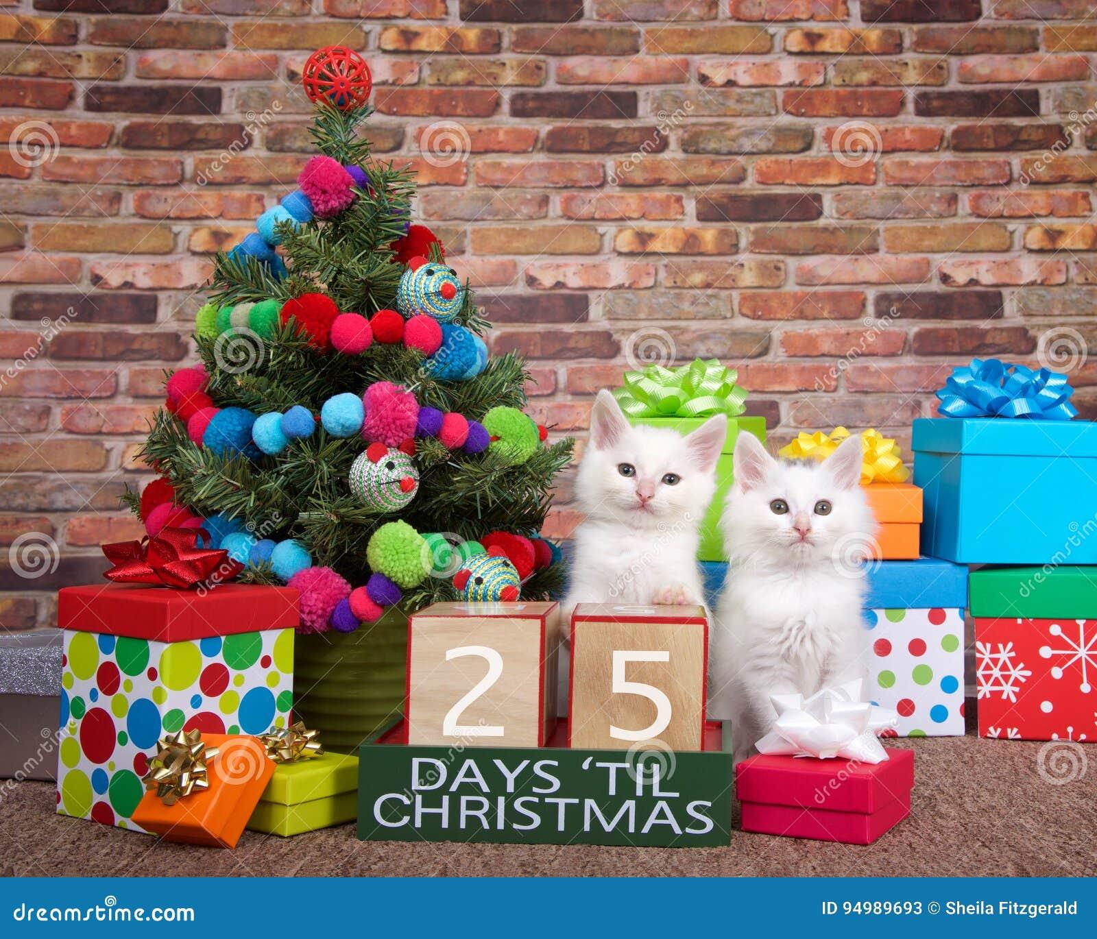 Contagem regressiva do gatinho ao Natal 25 dias