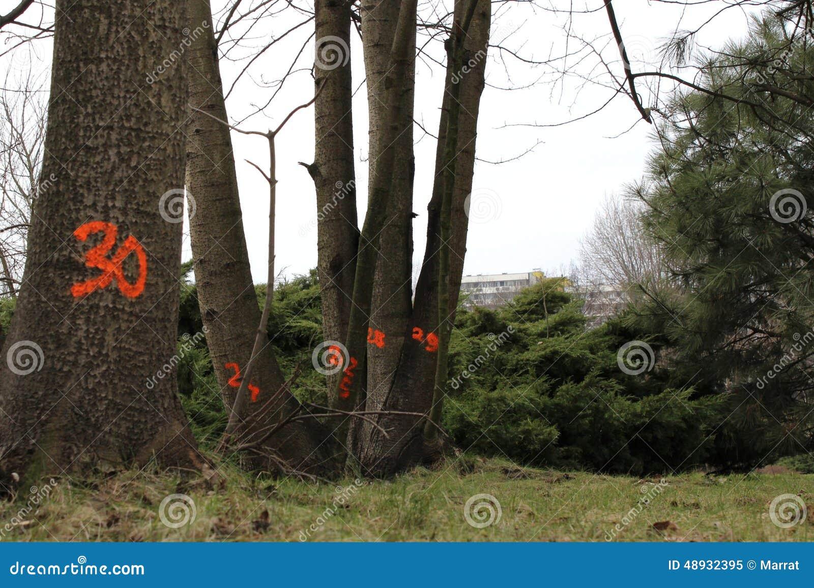 Contagem regressiva nas árvores