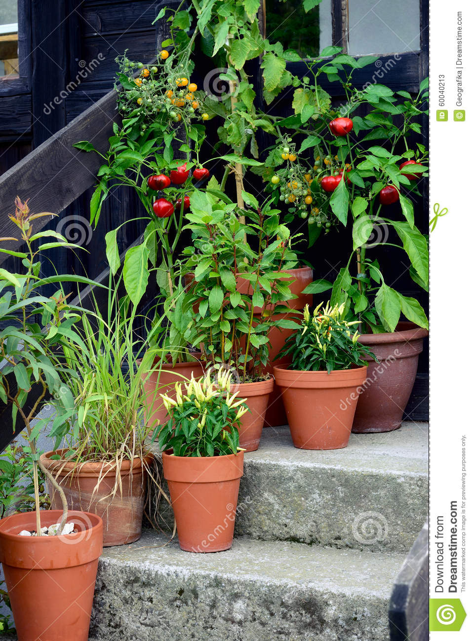 Ornamental Kitchen Garden Vegetables Pot