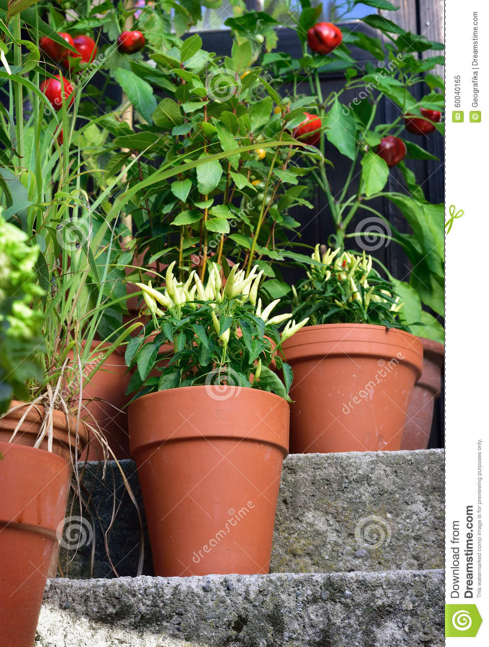 Container garden vegetables plants in pot stock photo for Ornamental garden plants