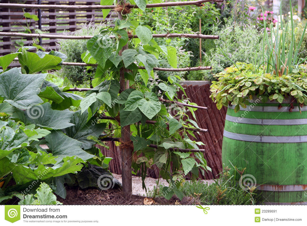 Container Vegetable Gardening Stock Image Image 23289691