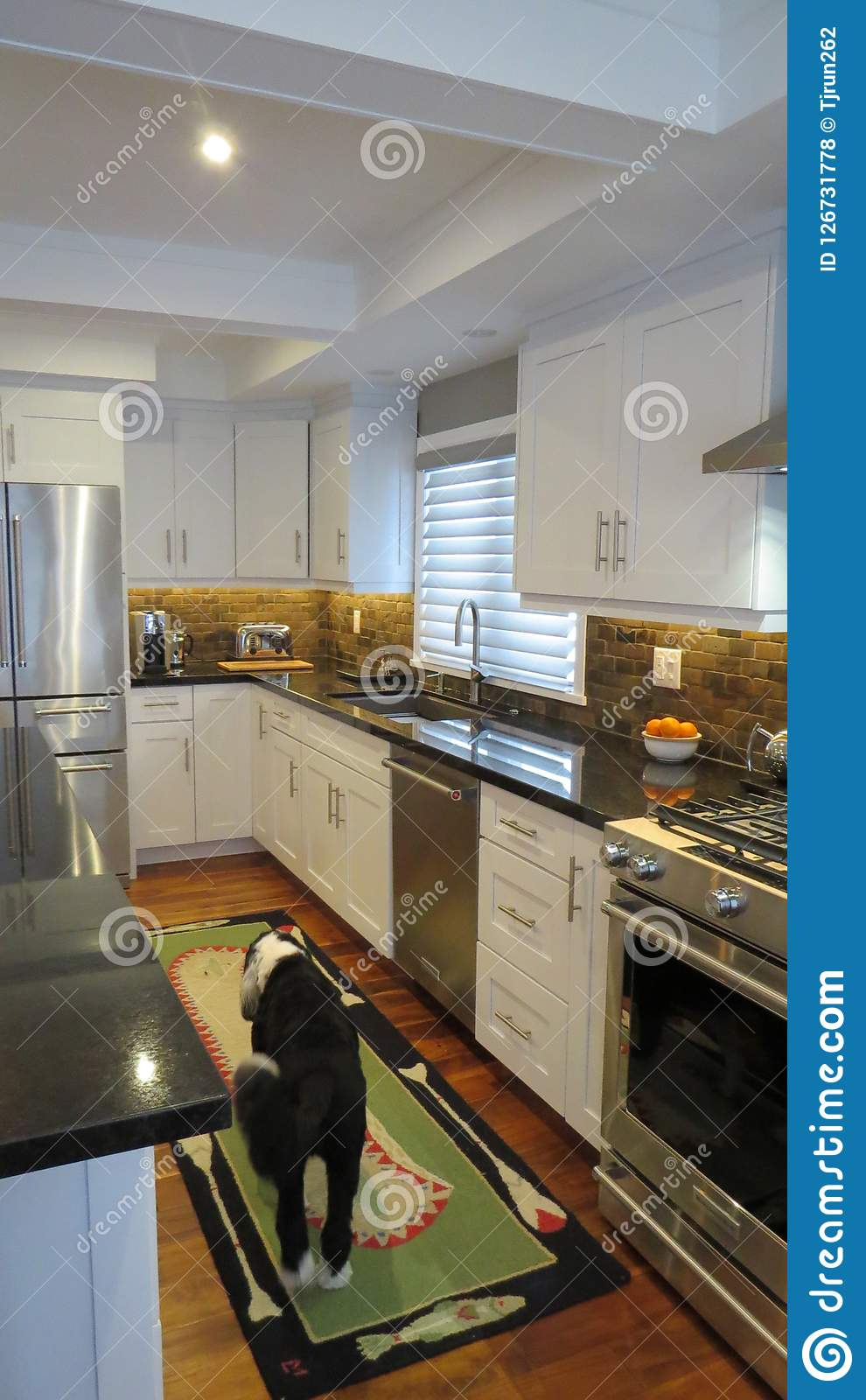 Contemporary Kitchen Interior With Dog And Rug Stock Photo Image Of Renovation White 126731778