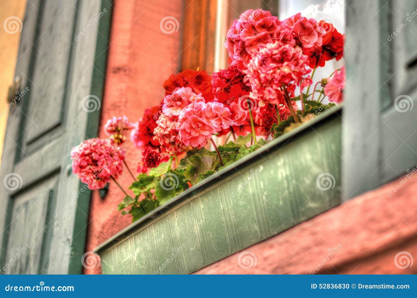 Contenitore di fiore del davanzale della finestra fotografia stock immagine di lavato paese - Davanzale finestra ...