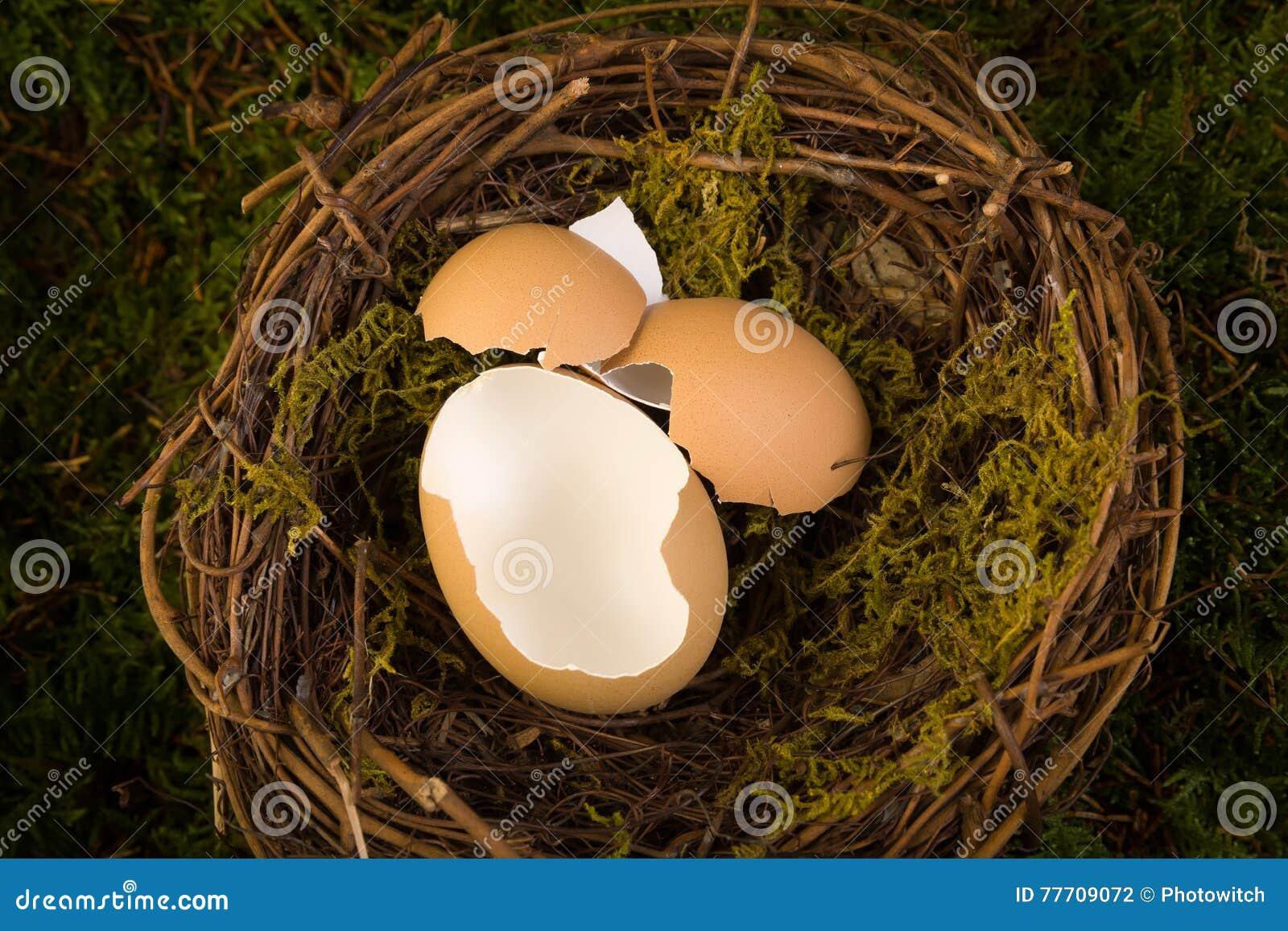 Contesto digitale del nido del bambino