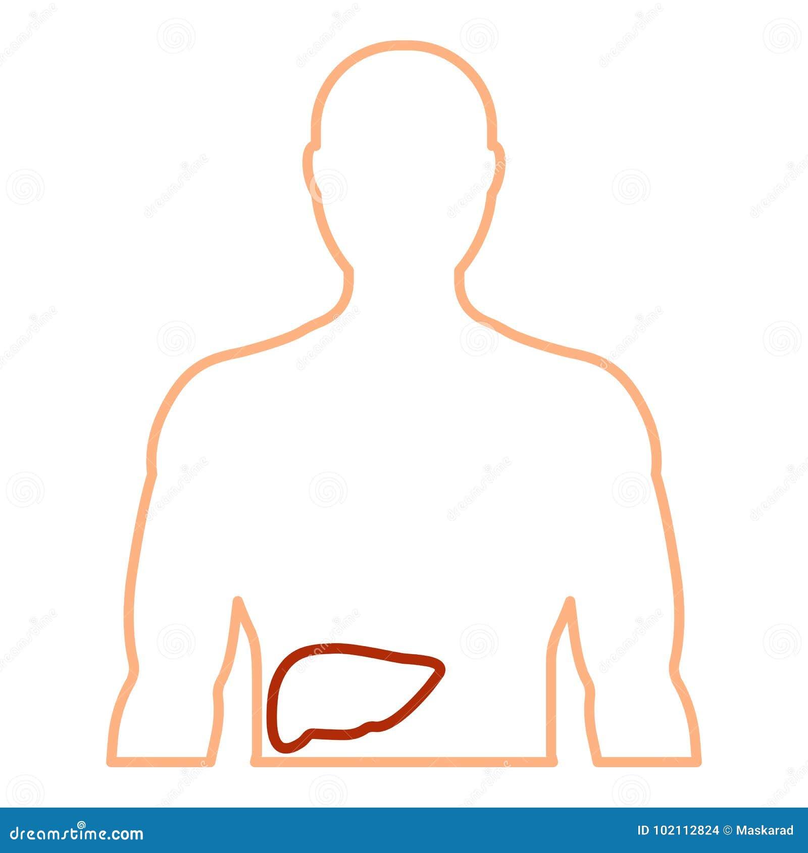 Contorno Del Cuerpo Humano Con El Hígado Stock de ilustración ...