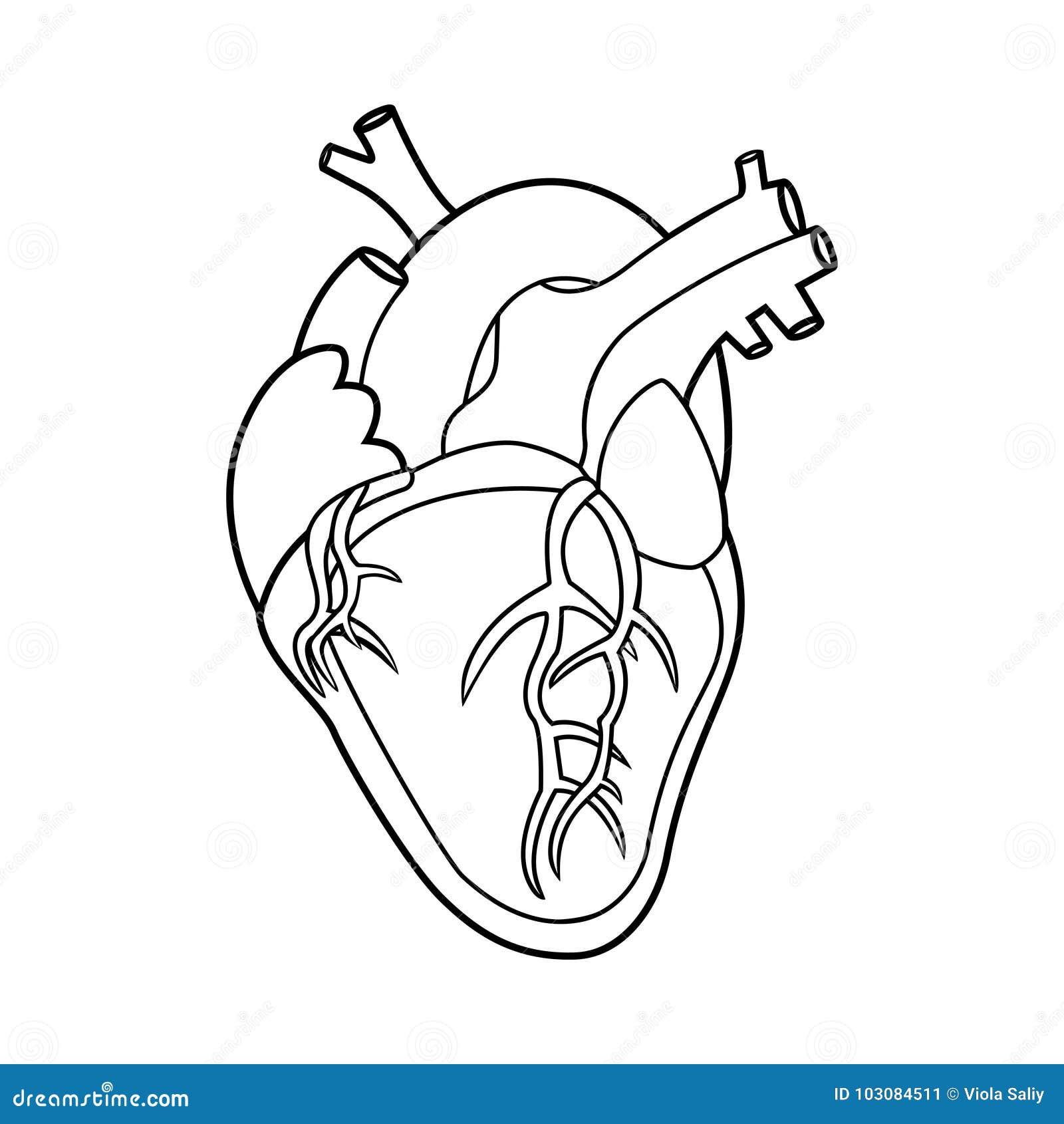 Contorno Humano Del Corazón Ilustración Del Vector Ilustración De