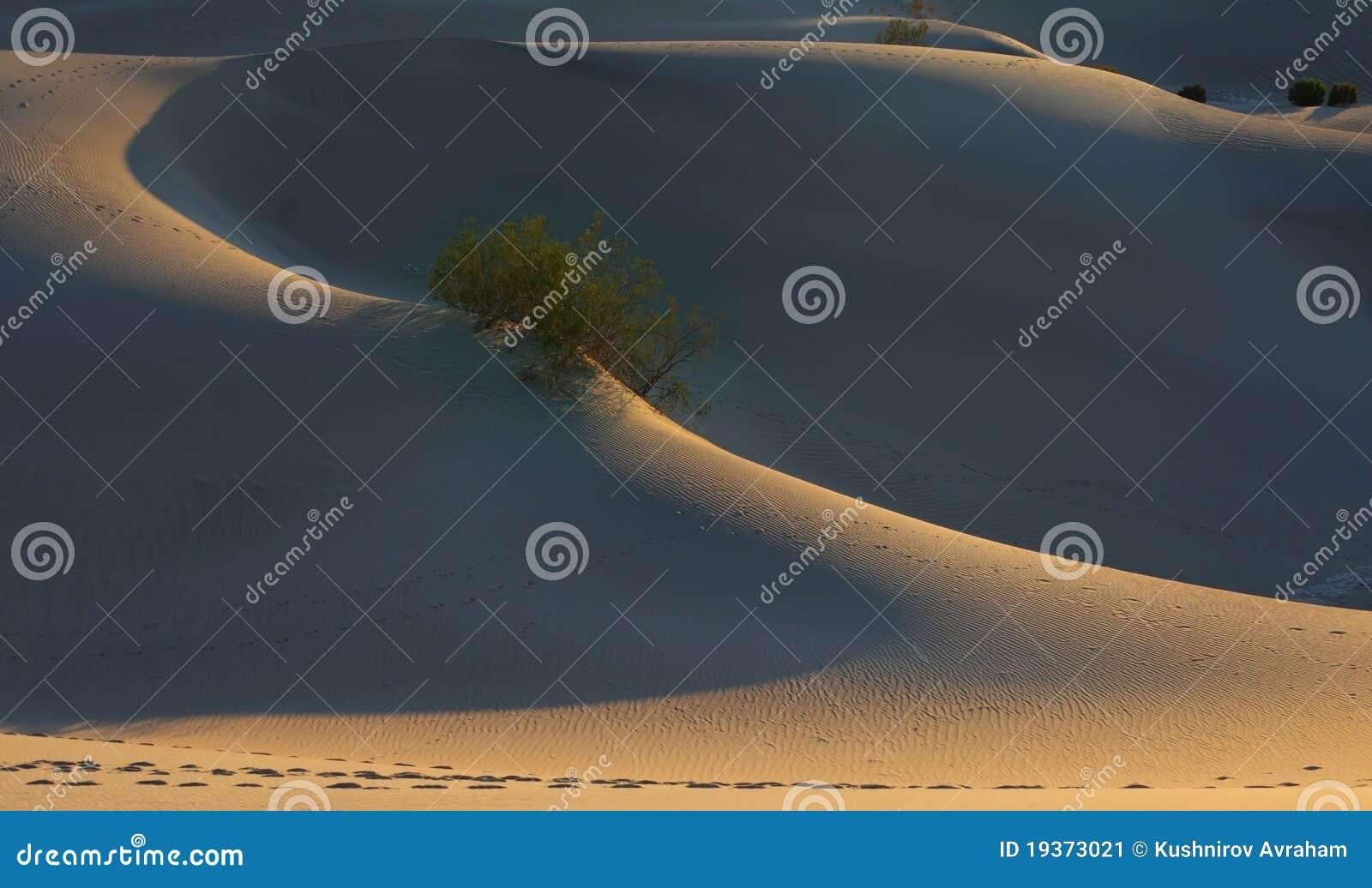 Contornos finos de dunas de areia