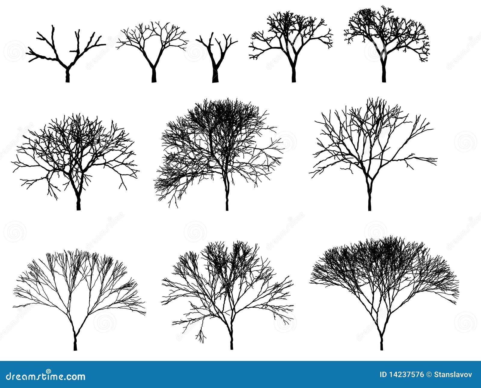 Contour cg de silhouette d 39 arbre illustration stock - Croquis arbre ...