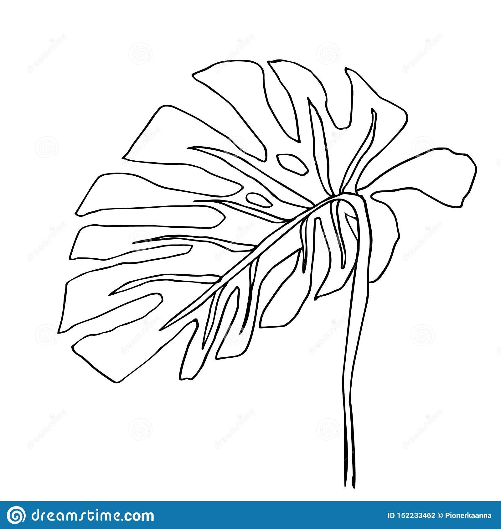Line Monstera Stock Illustrations 3 688 Line Monstera Stock Illustrations Vectors Clipart Dreamstime