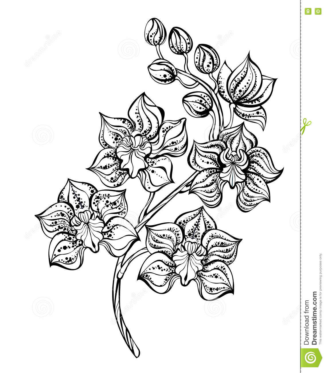 Contour Orchid Stock Vector Illustration Of Pencil Concept 74492195