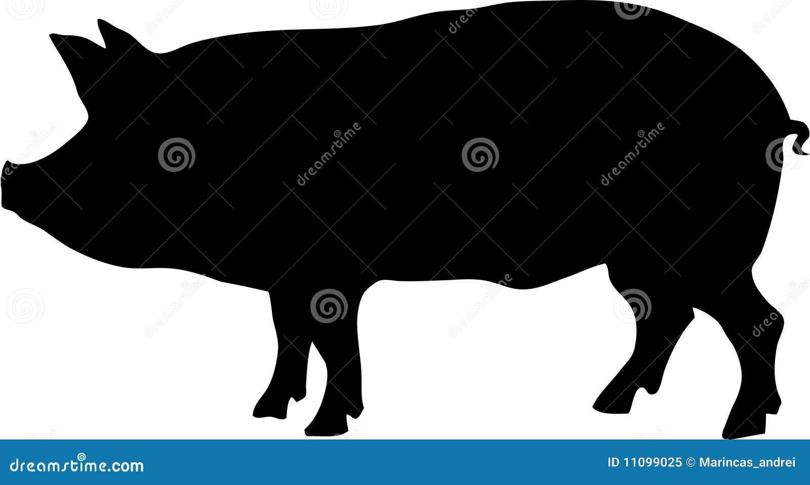 Contour of pig