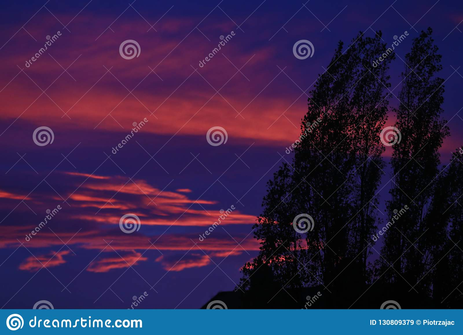 Contour of trees with colorful sunset