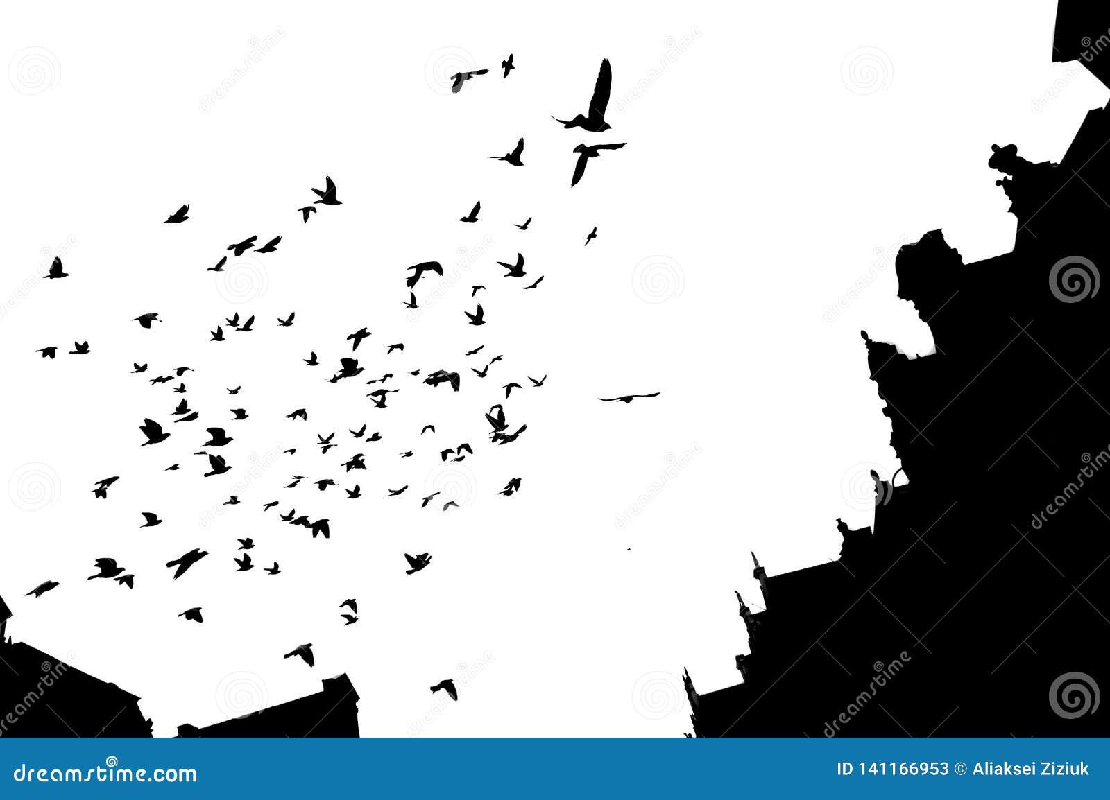 Contouren van vogels en gebouwen tegen de hemel