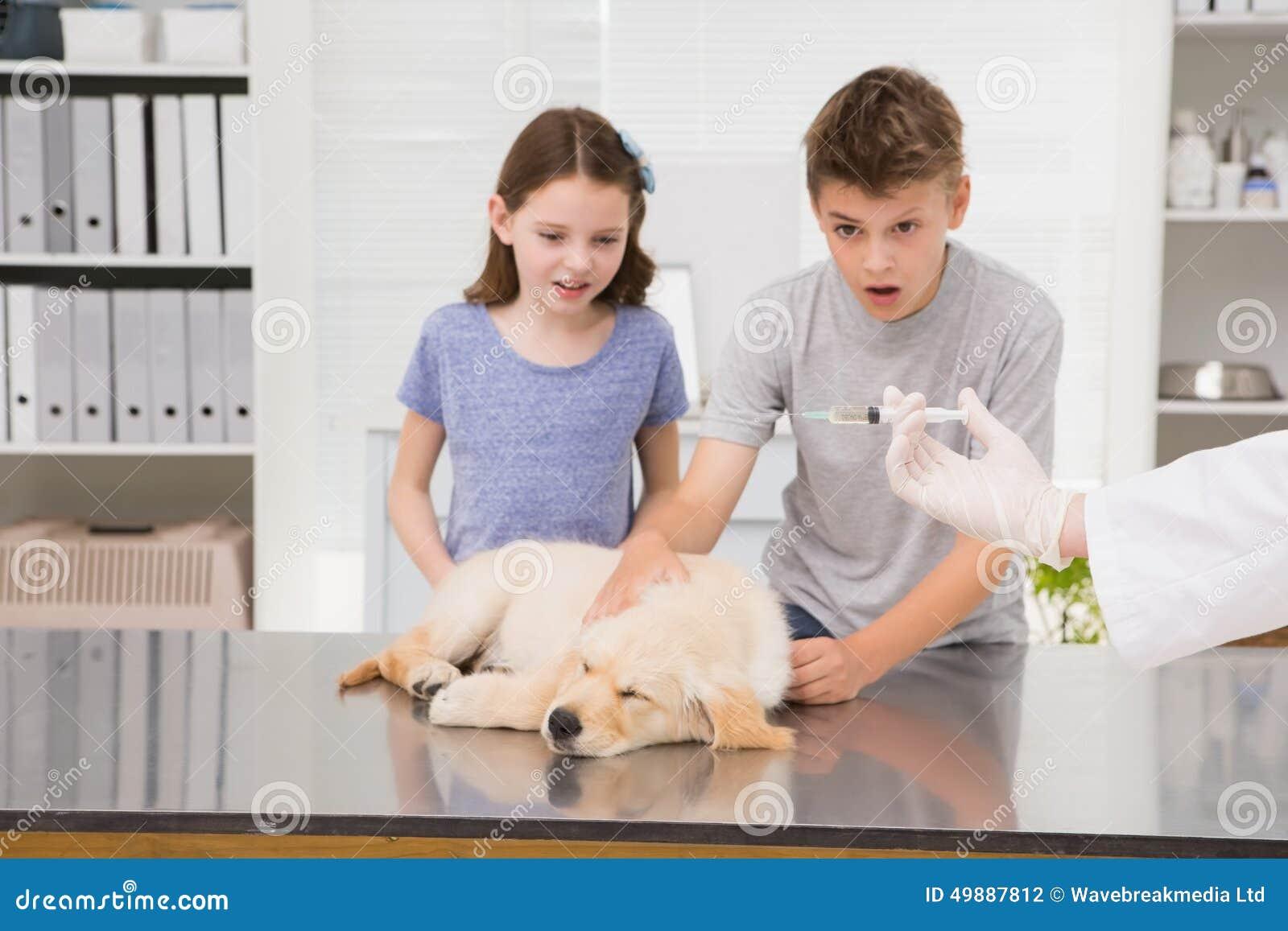 Contrôlez examiner un chien avec son propriétaire effrayé