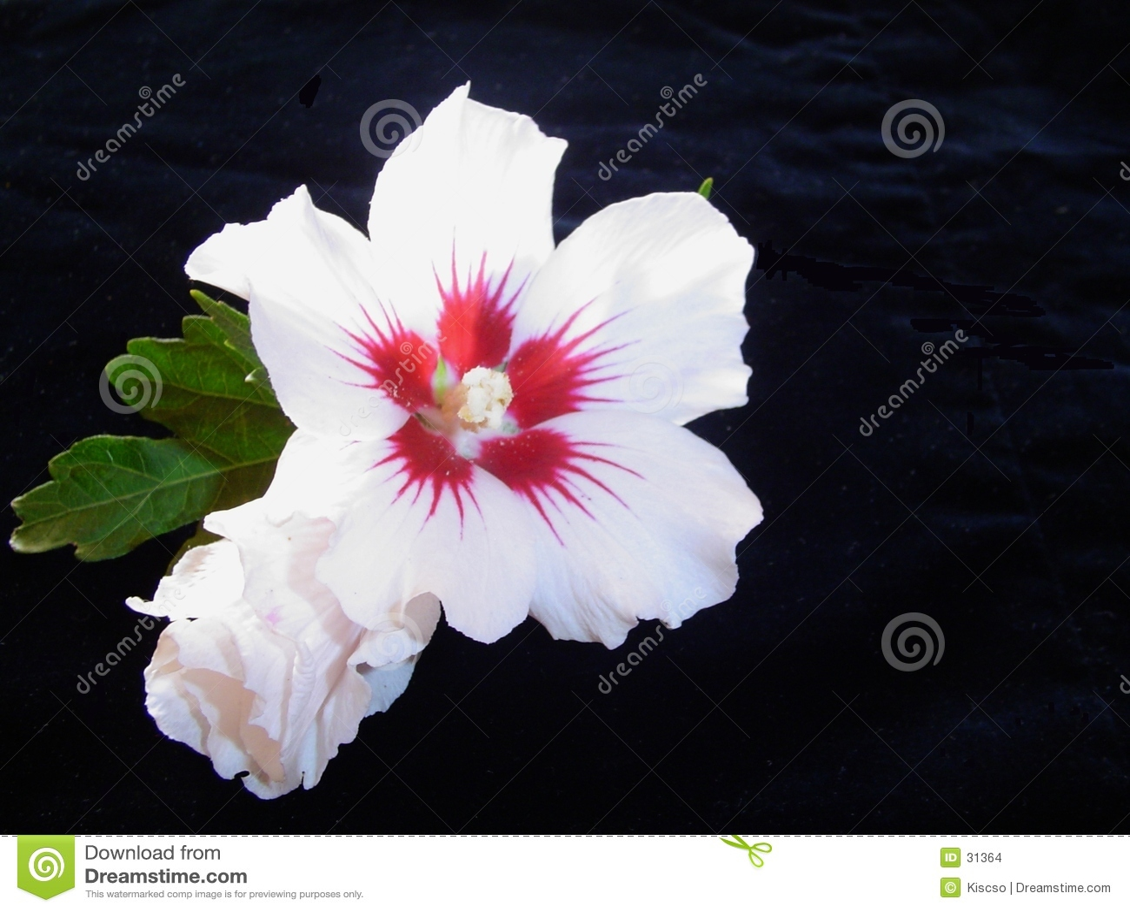 Contraste de fleur