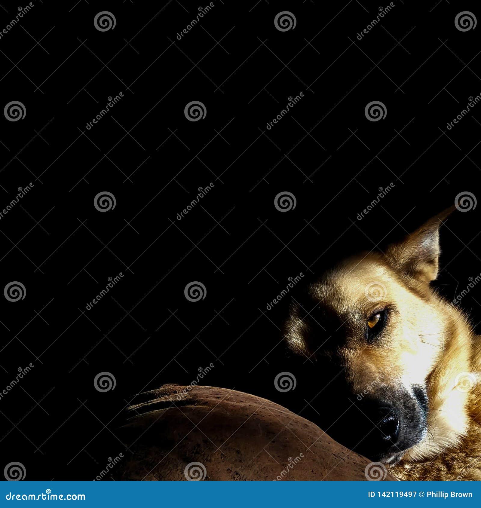Contrasto del cane di sonno nel sole