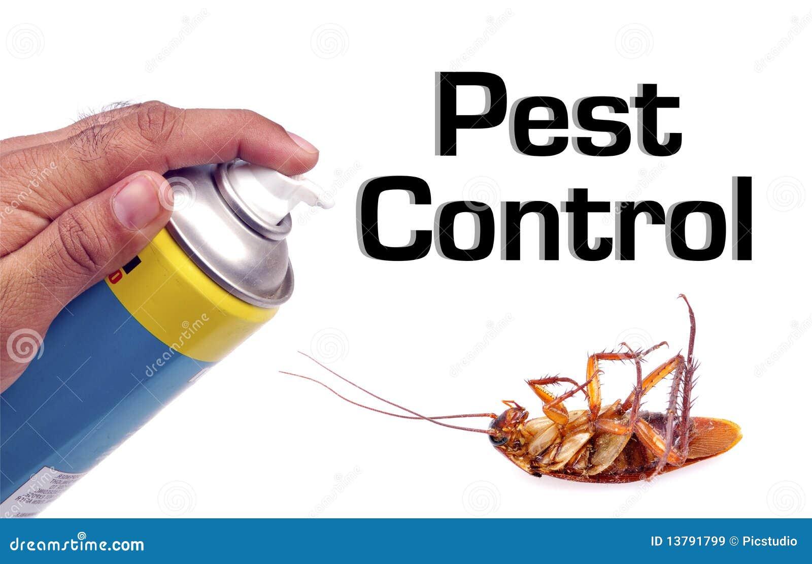 Les images des parasites les helminthes de la personne