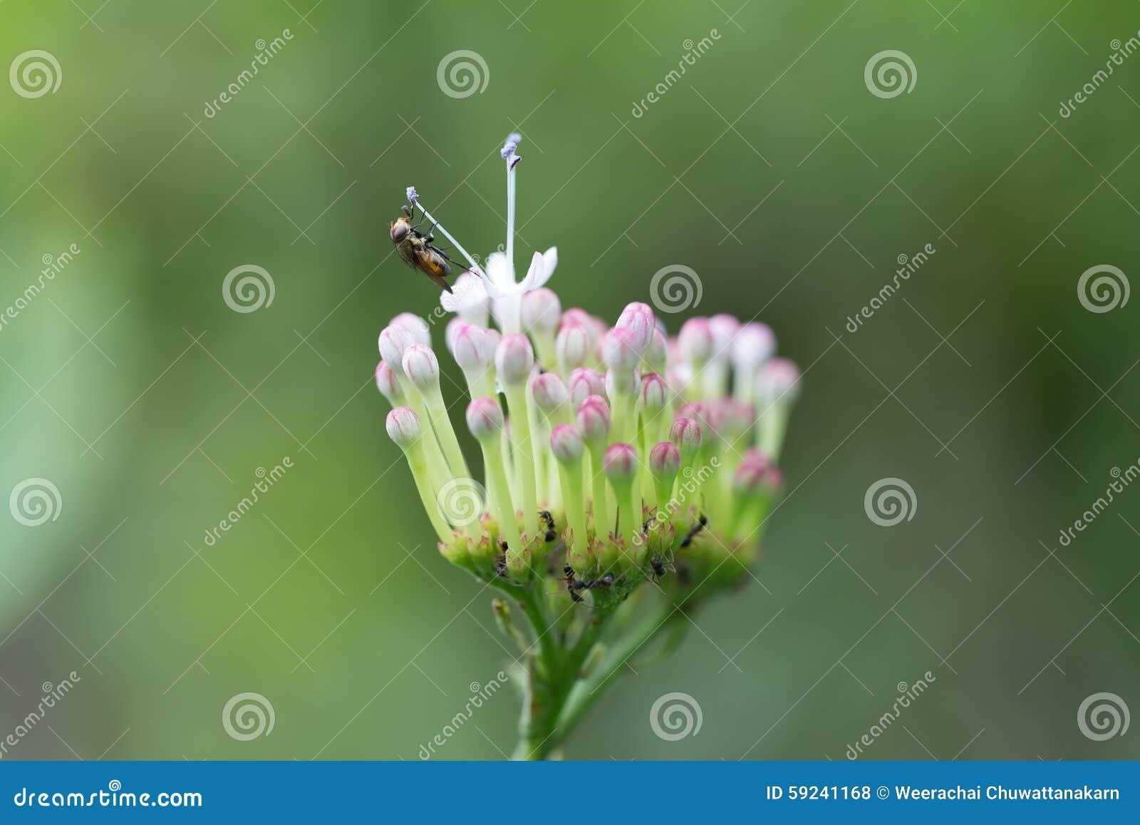 Download Control De La Abeja Del Polen De La Flor Foto de archivo - Imagen de cubo, hermoso: 59241168