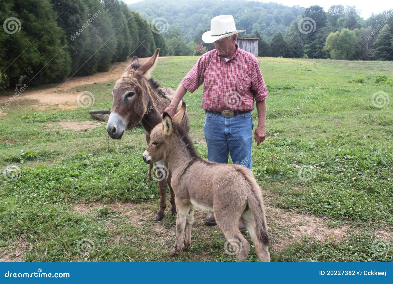 Controlar hacia fuera los burros