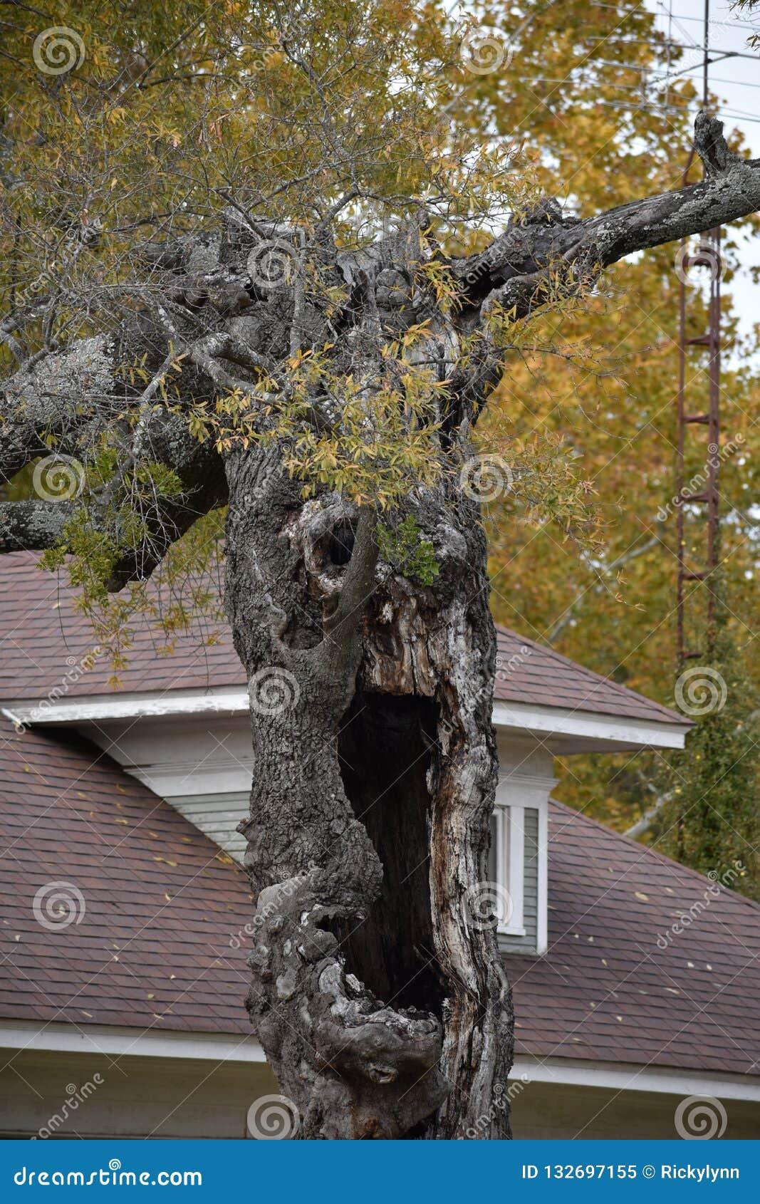 Convenez l arbre en Gilmer Texas Nov 25 2018