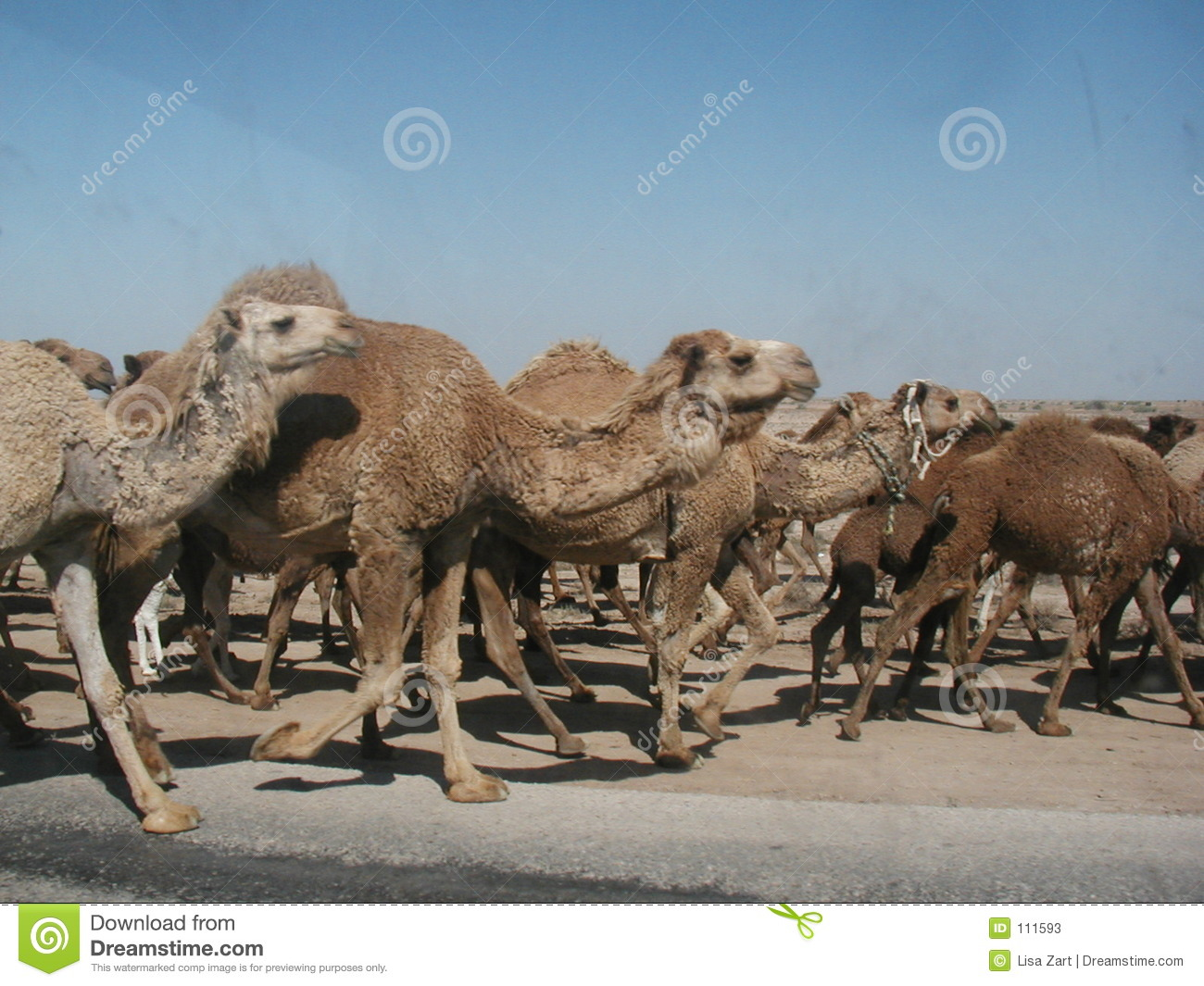 Download Convoy Guests stock image. Image of company, encountered - 111593