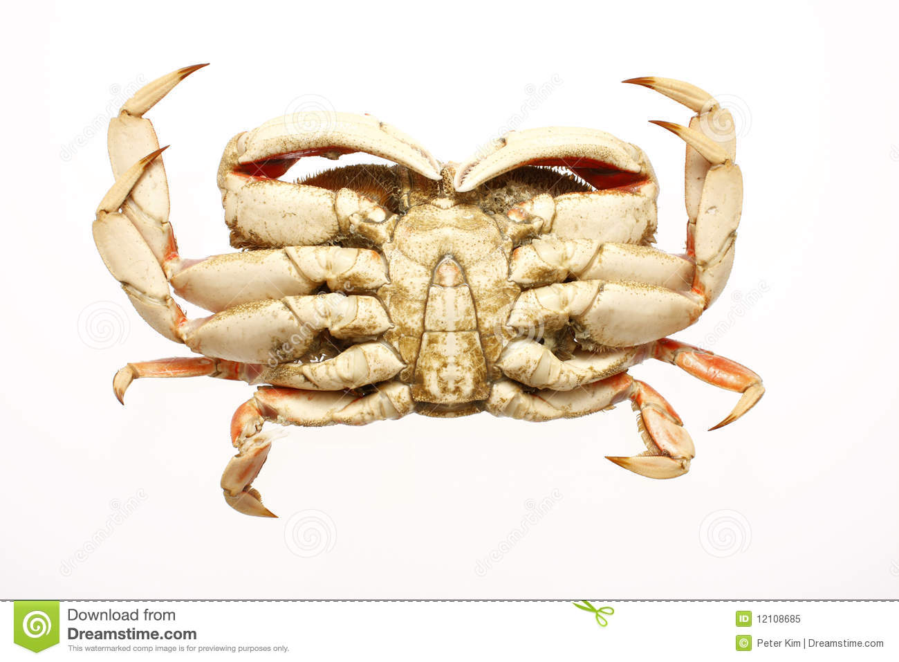 how to clean a cooked dungeness crab