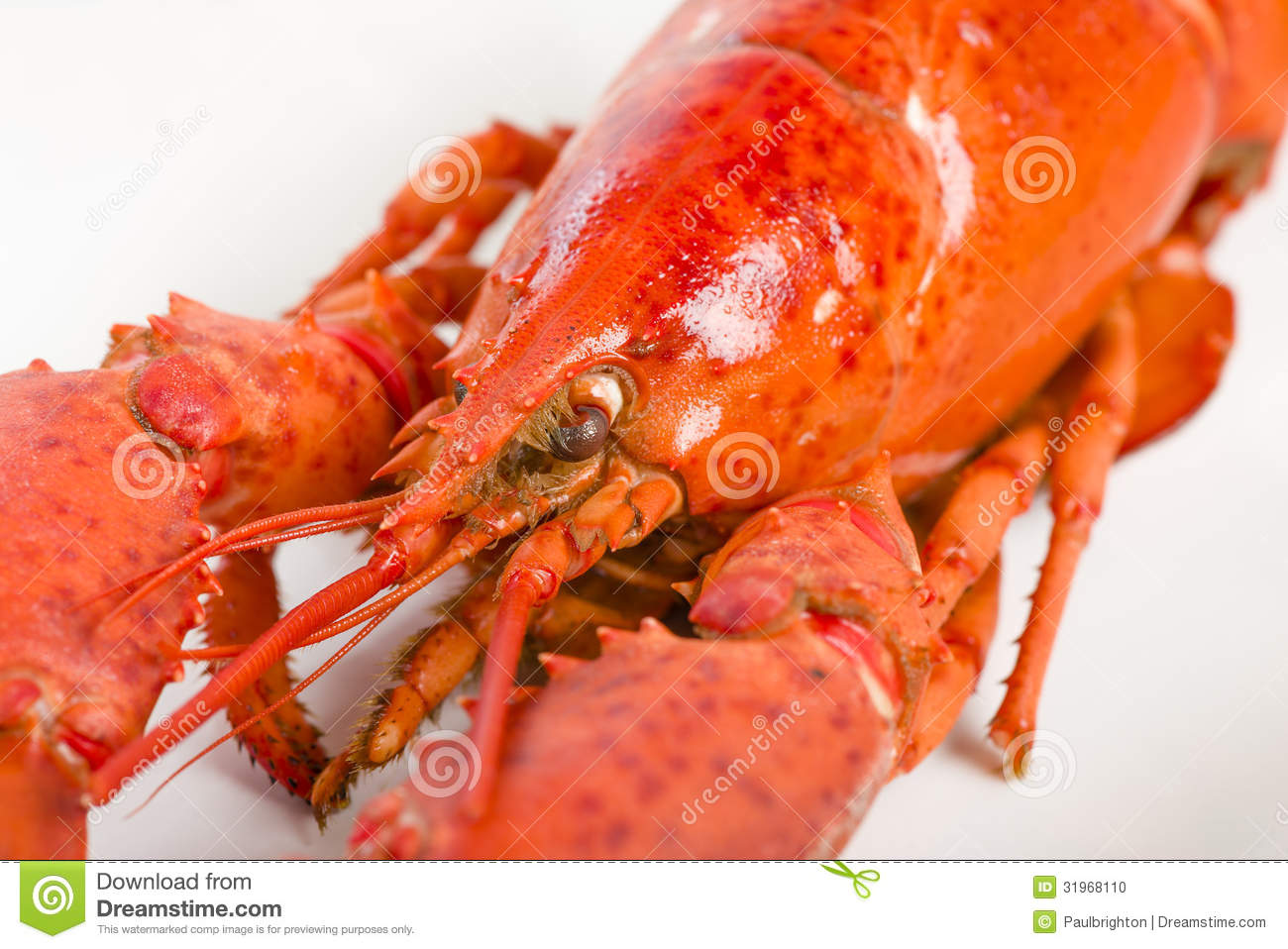 Cooked Lobster Stock Photography | CartoonDealer.com #31968110