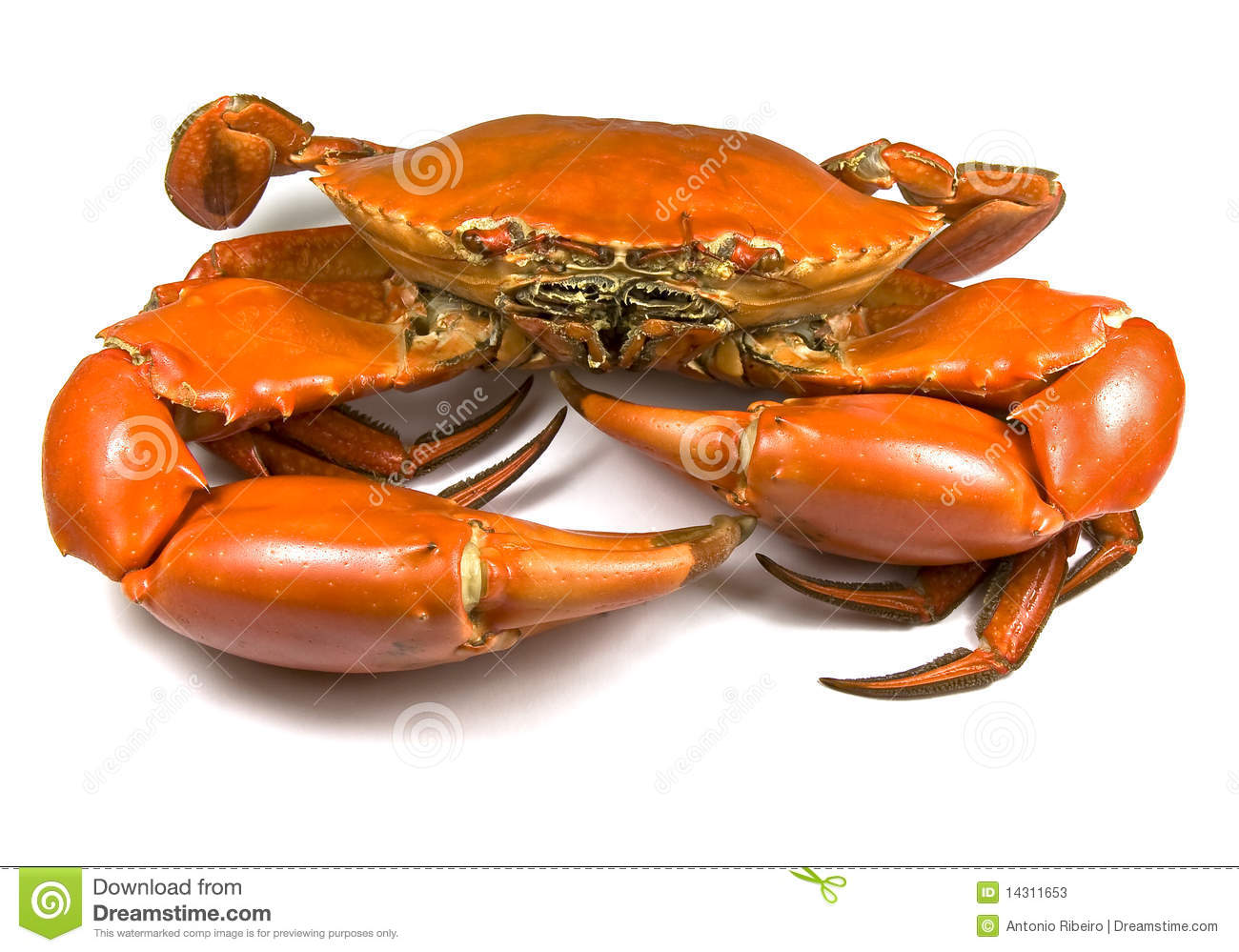 Cooked Mud Crab