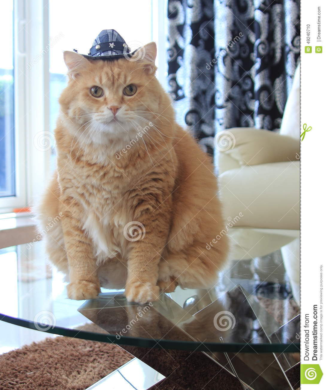 cookie cat with cowboy hat stock photo image 49240710. Black Bedroom Furniture Sets. Home Design Ideas