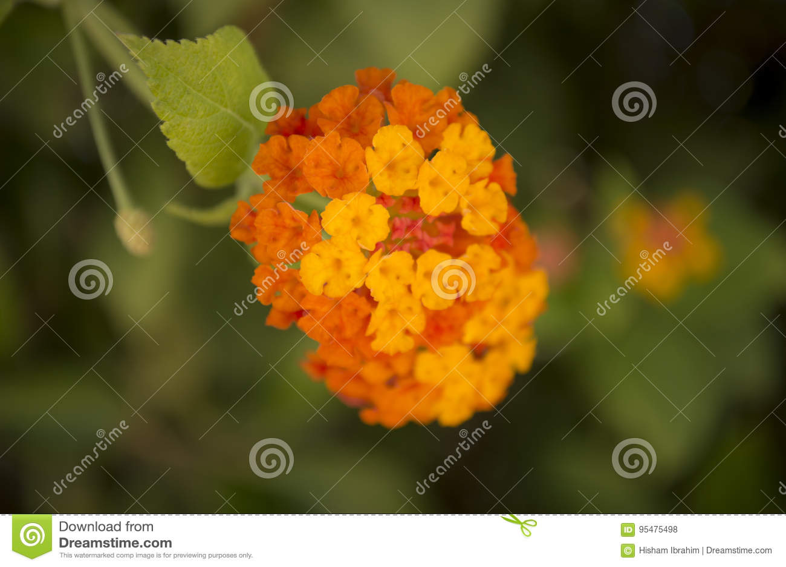 Cool barwionych kwiaty