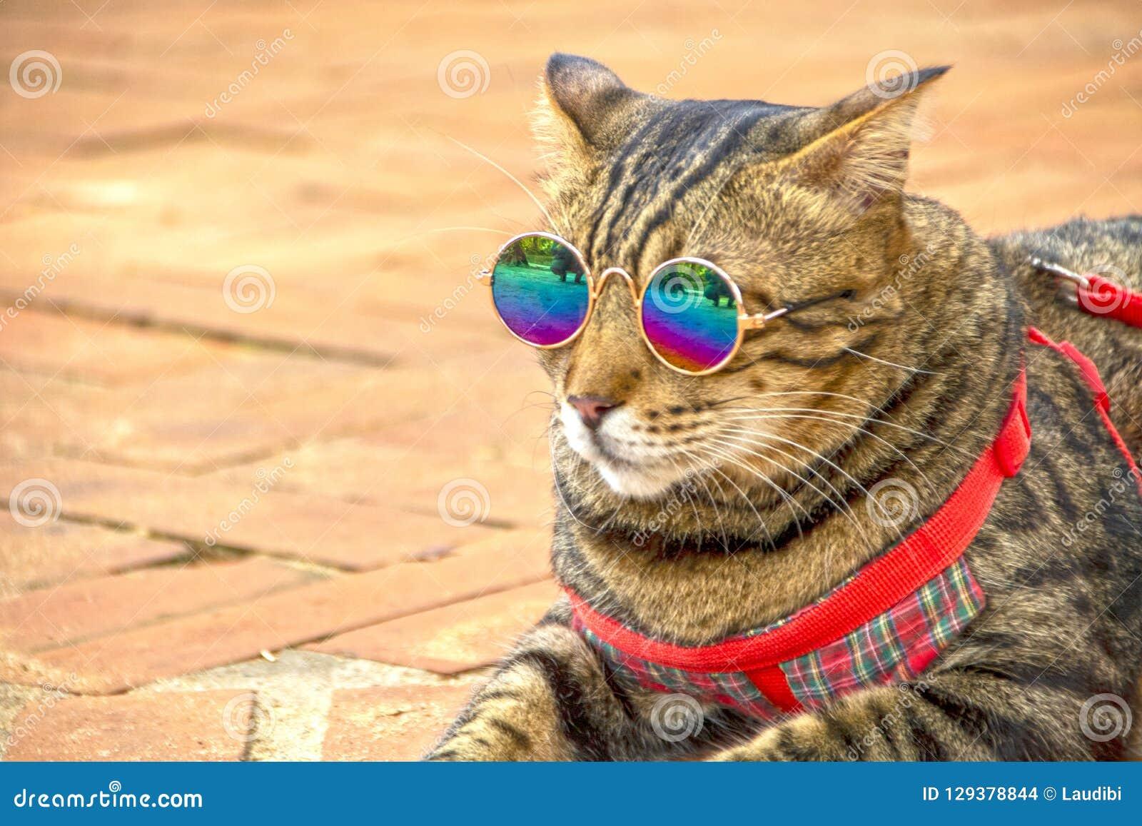 Cool Cat Stock Photo Image Of Glasses Feline Elegant 129378844