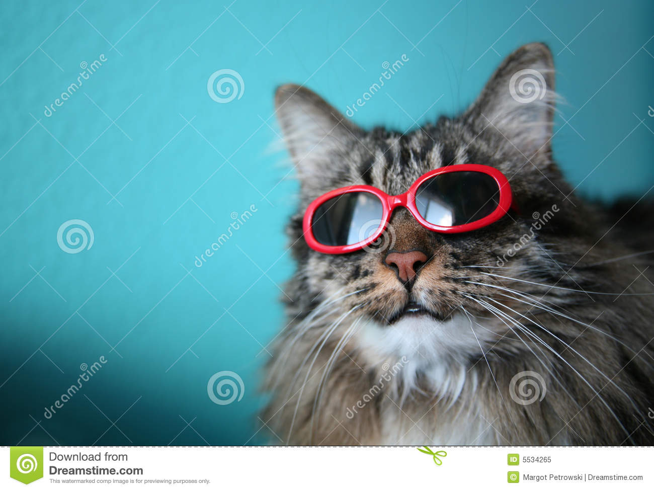 Cool Cat with Shades