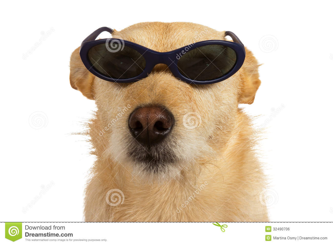 Cool dogs with sunglasses - photo#16