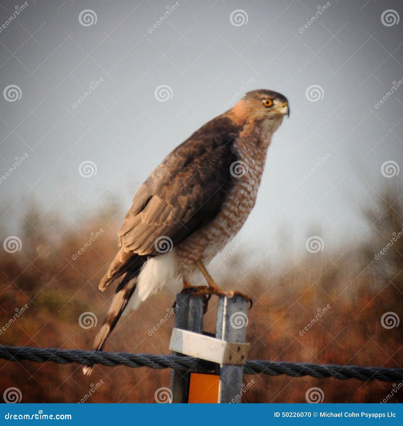psy鸟�9�%9e,y/&_mr: no pr: no 1 80 0 coop2 id 50226070 © michael cohn psy
