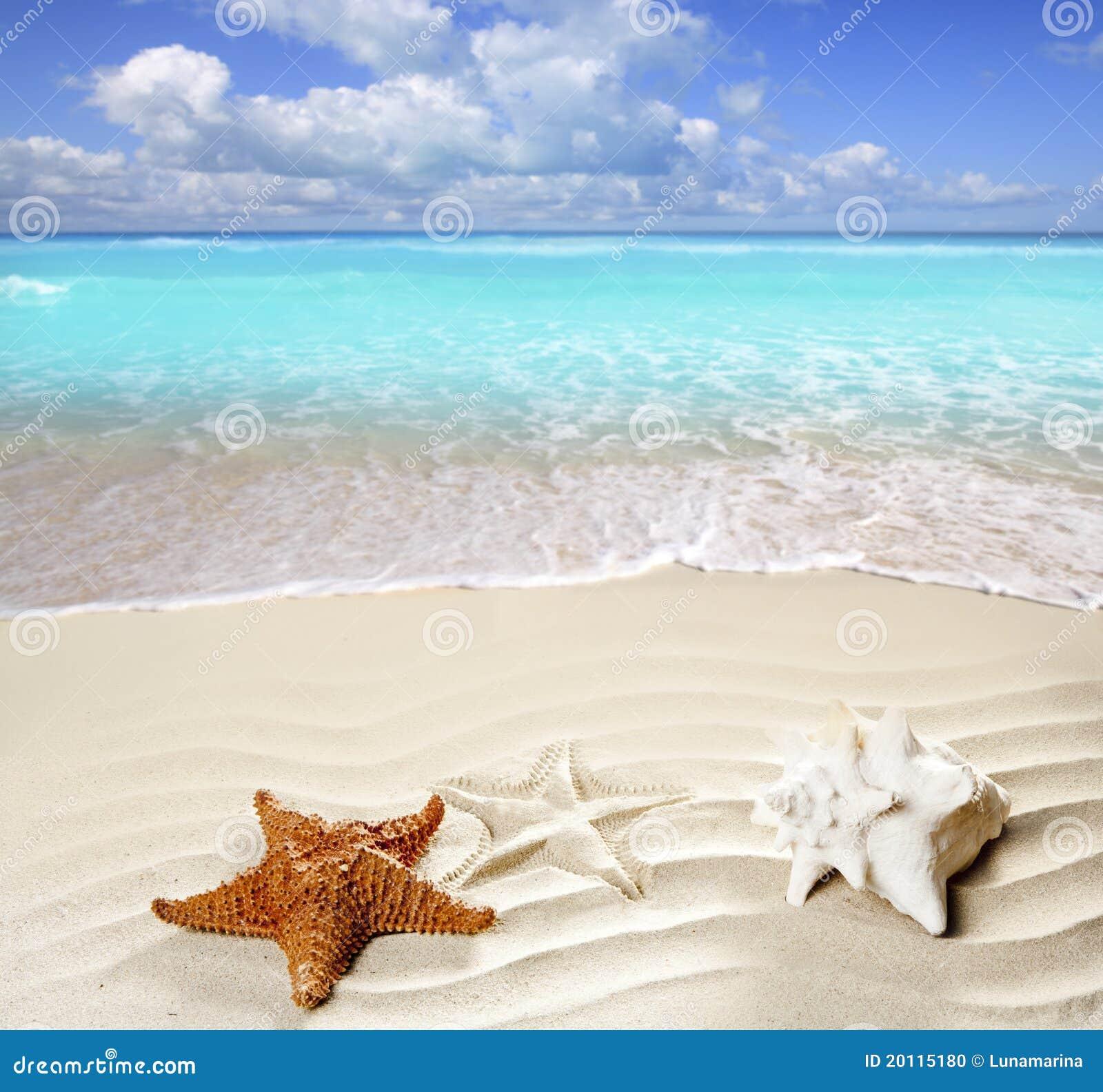 Coperture bianche delle stelle marine della sabbia della for Disegni della casa sulla spiaggia