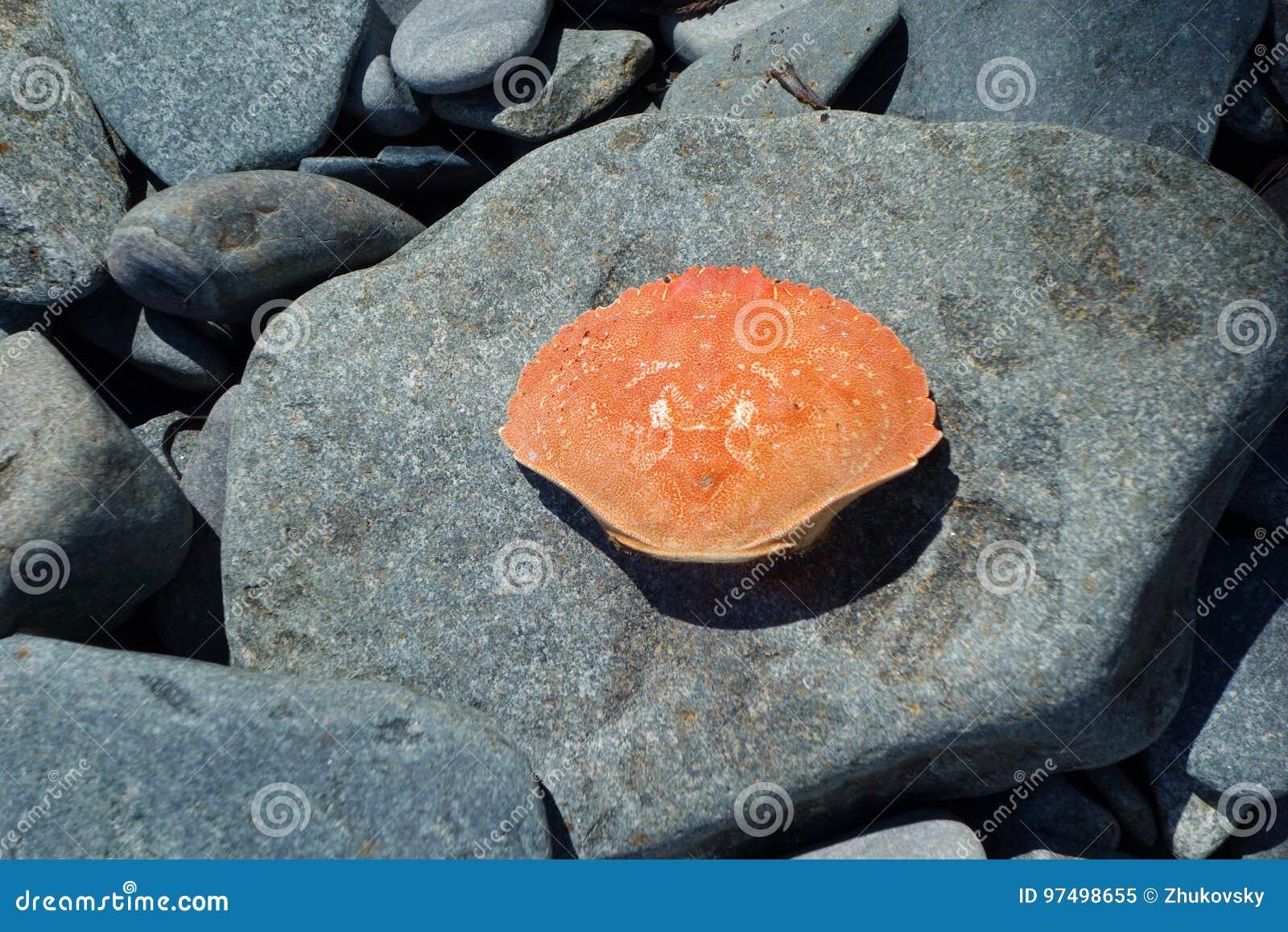 Coperture del granchio su una spiaggia rocciosa