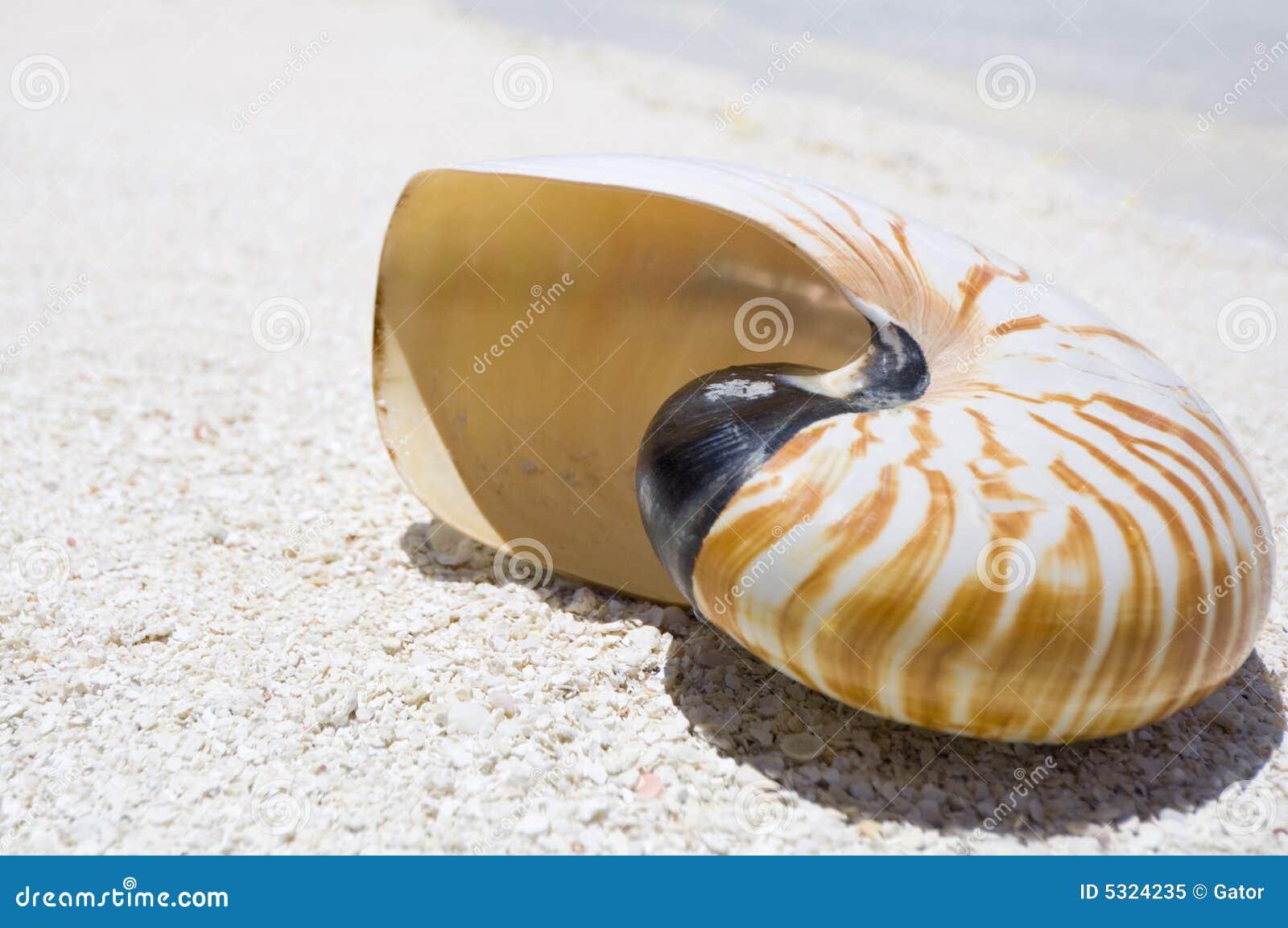 Download Coperture del Nautilus immagine stock. Immagine di ragno - 5324235